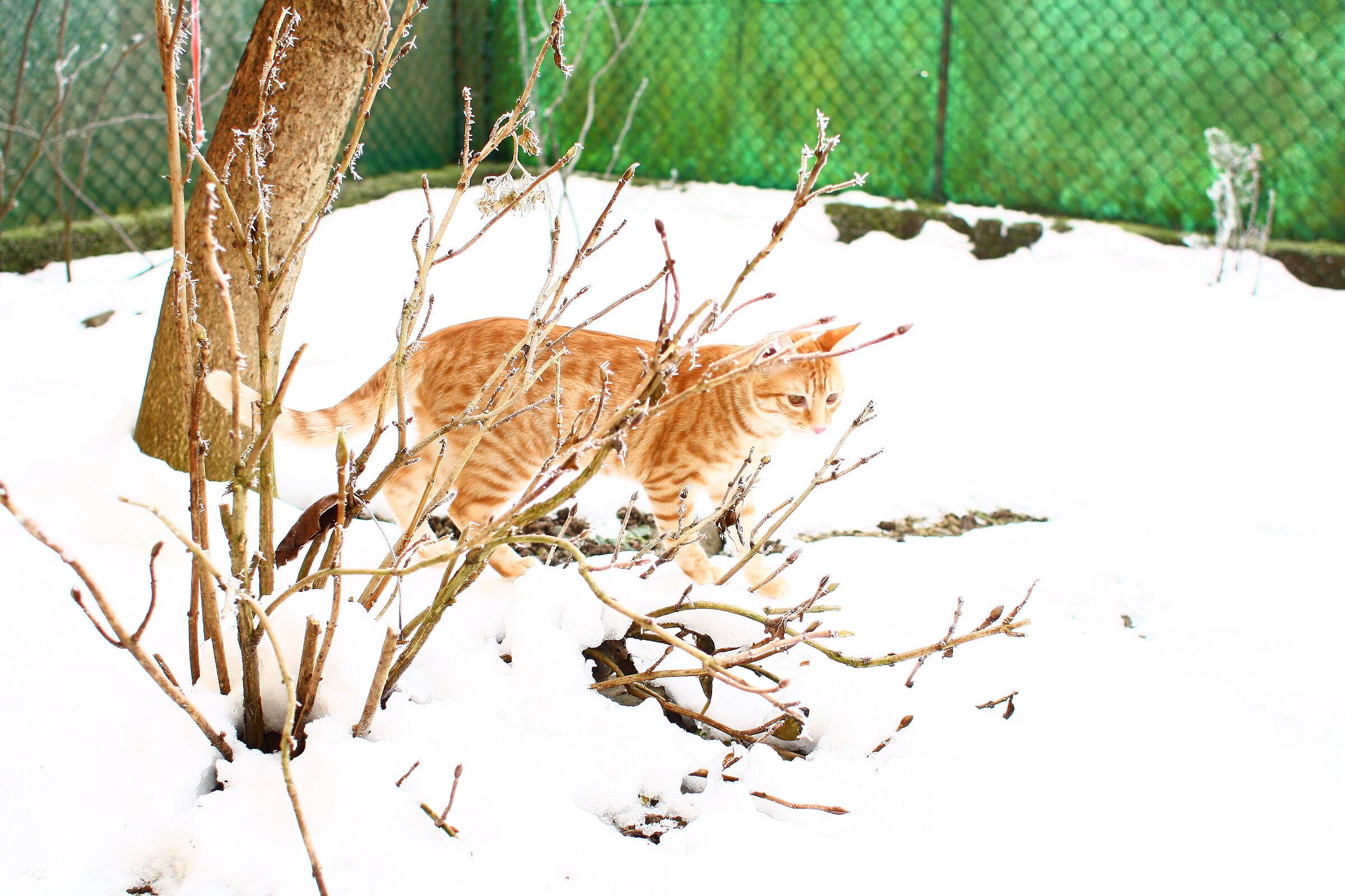 Snowcat.....
