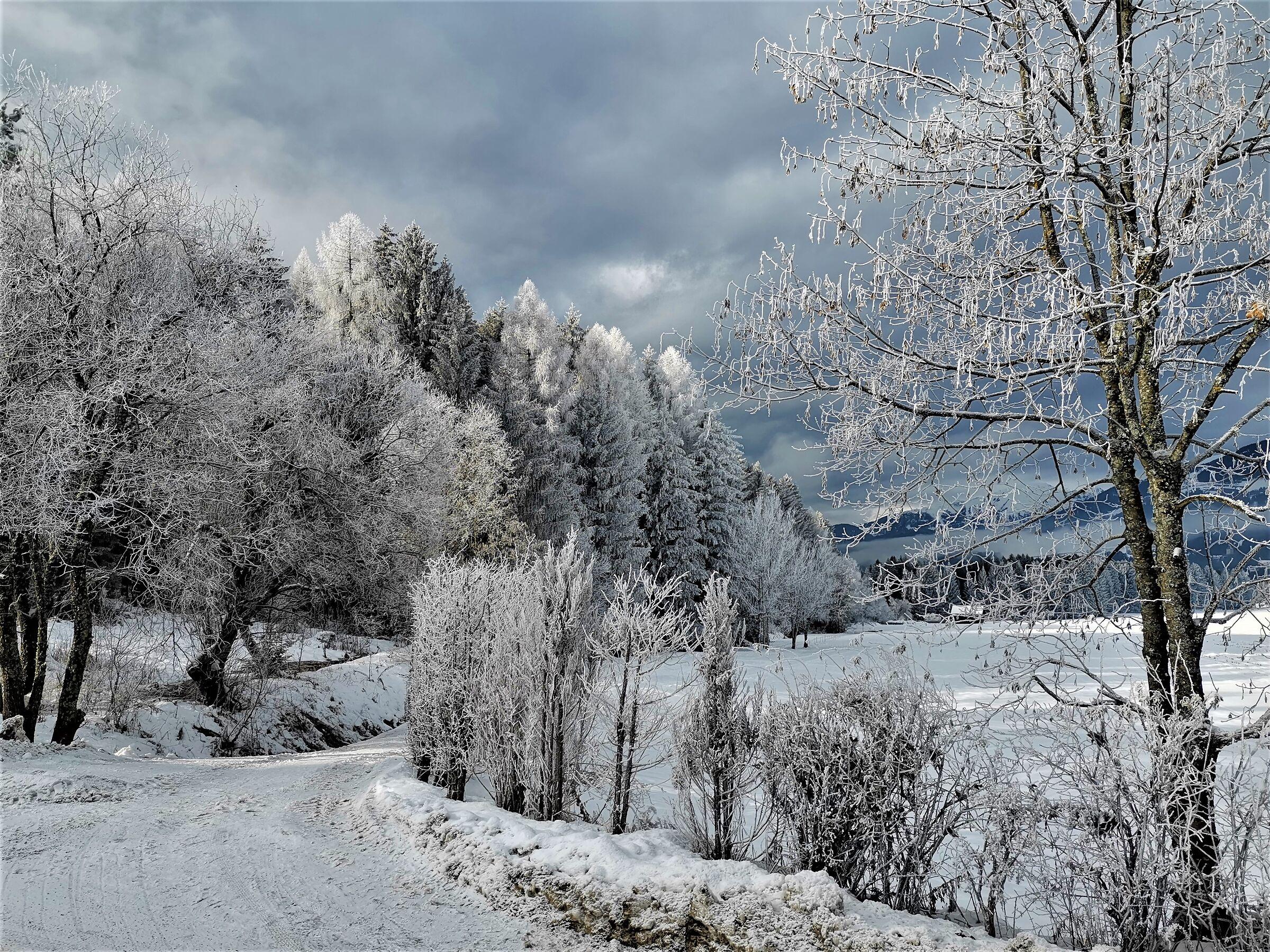 50 shades of Winter...