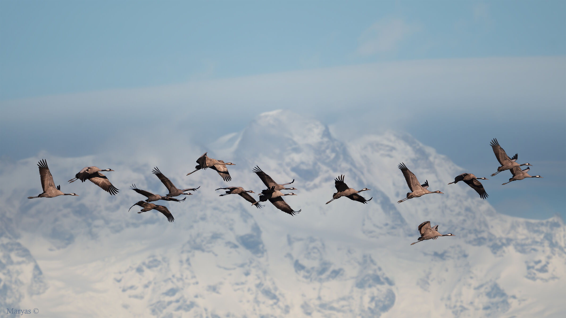 Crane flight...