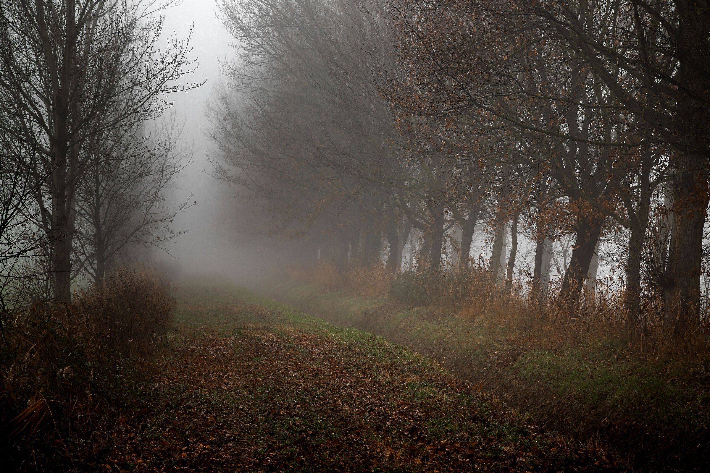 fog along the ditch...