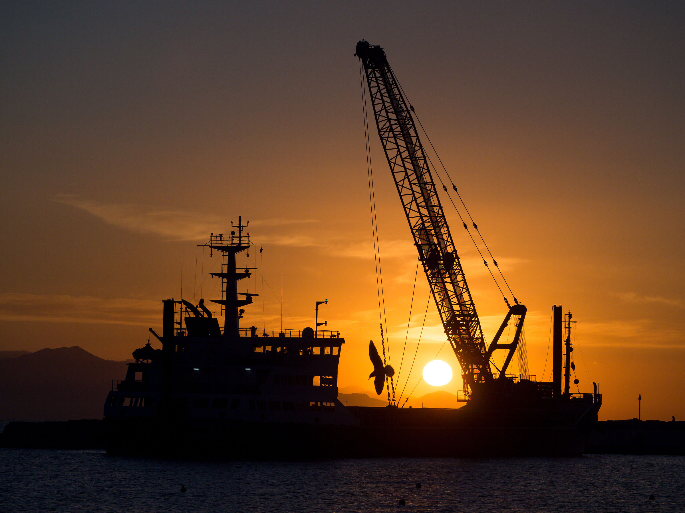 The dredge and the seagull....