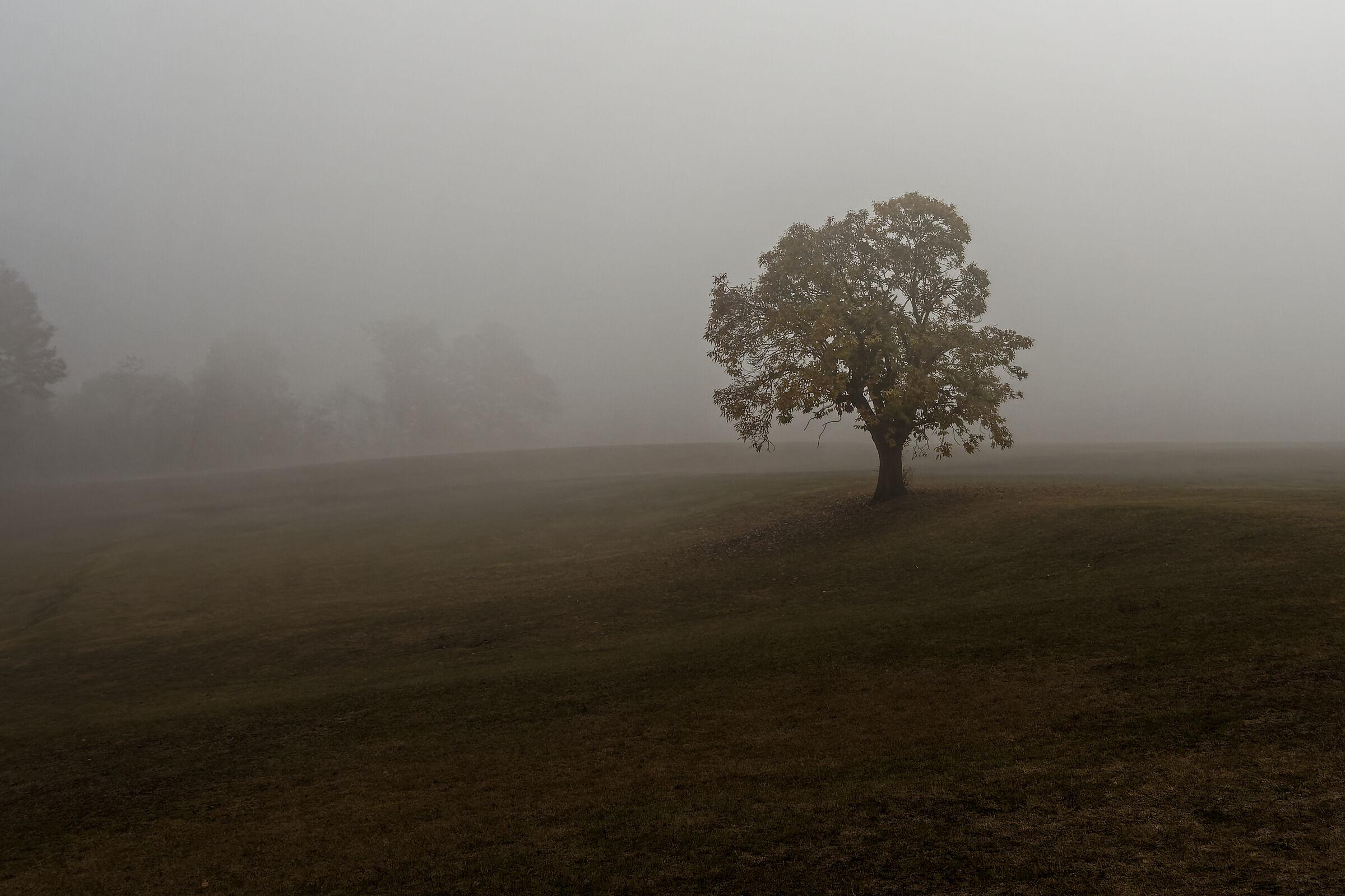 autumnal swarm ...