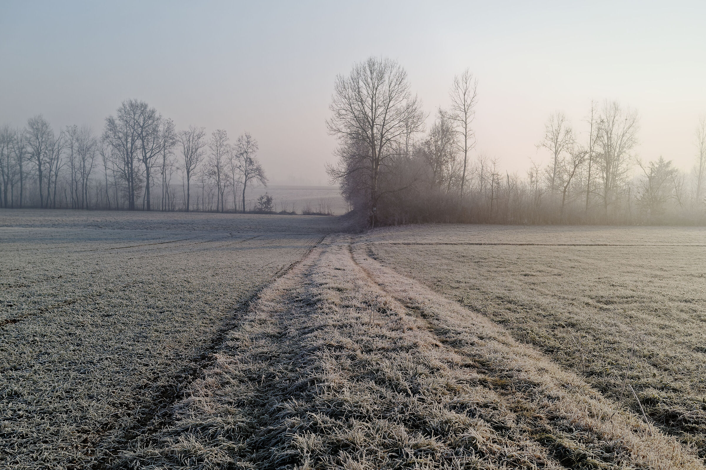 the frost of dawn ...