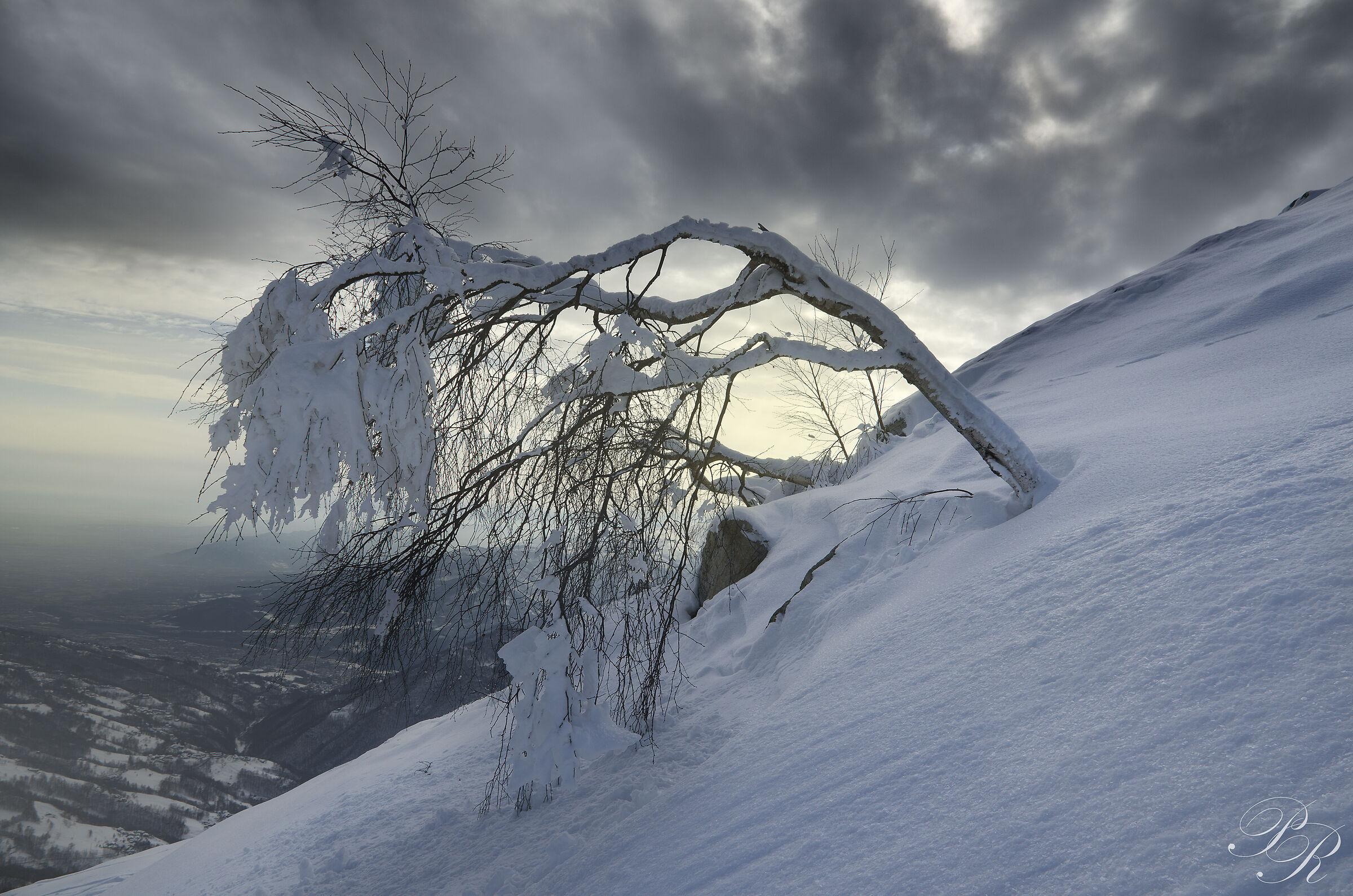 Winter austerity...