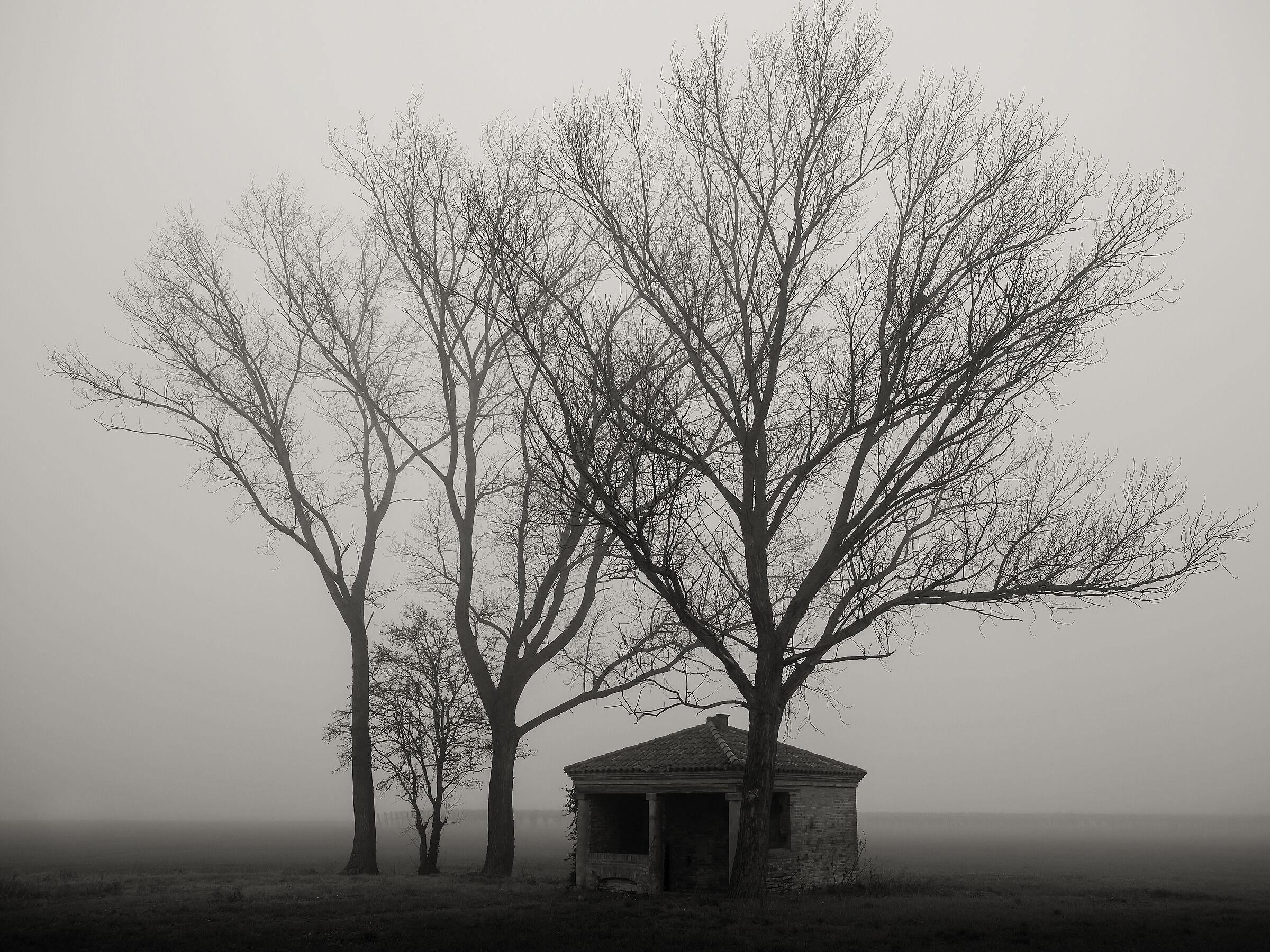 fog in the fields...