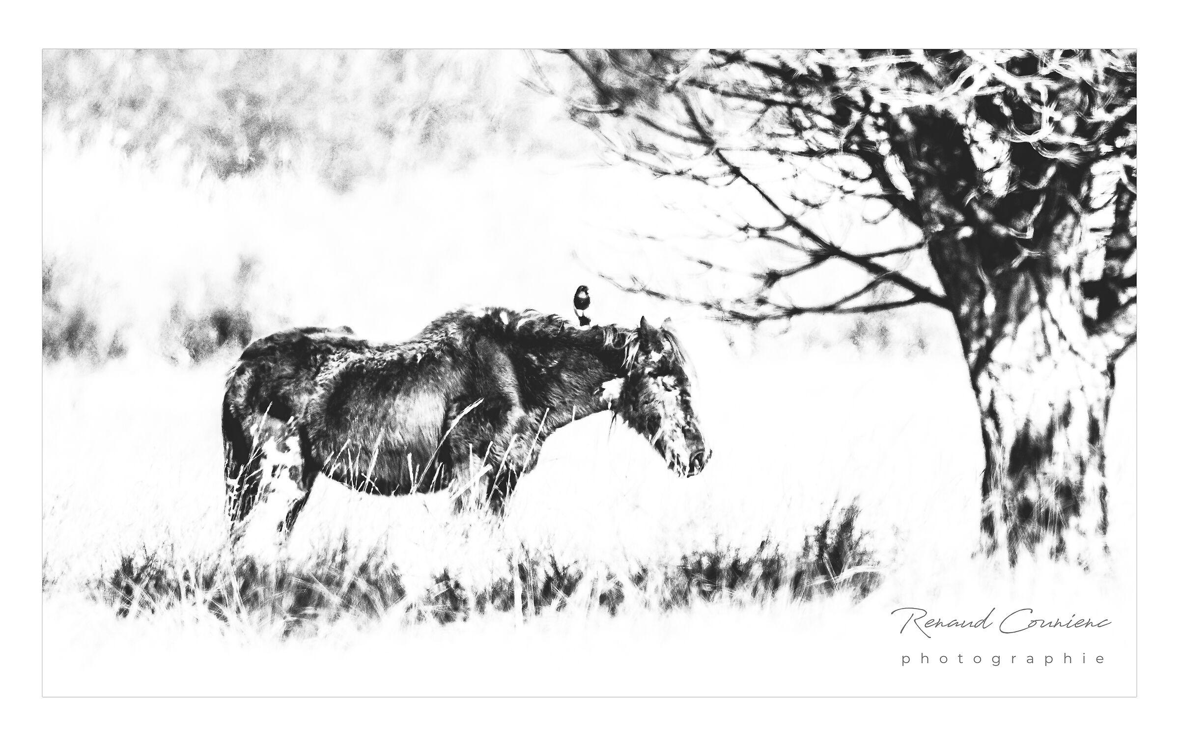 Il vecchio cavallo e la gazza...