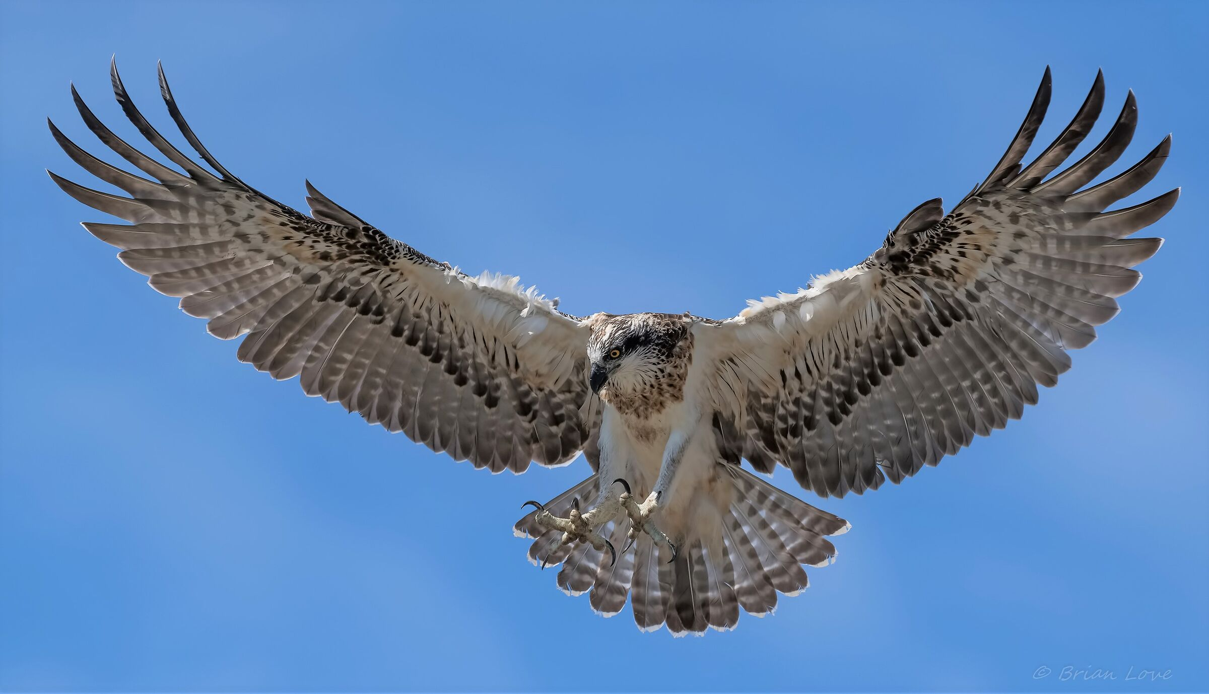 Wings and Talons...