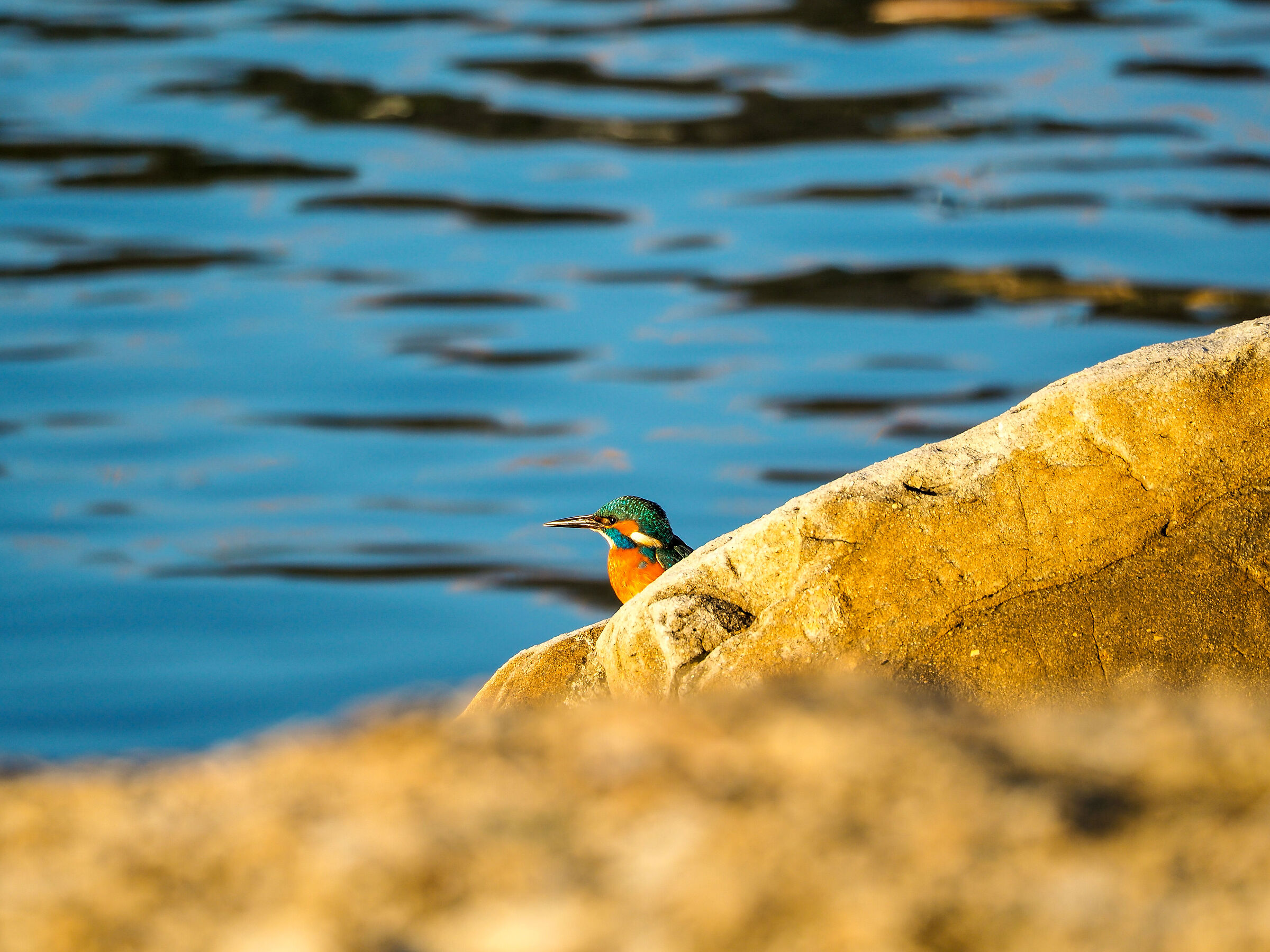 My first kingfisher....