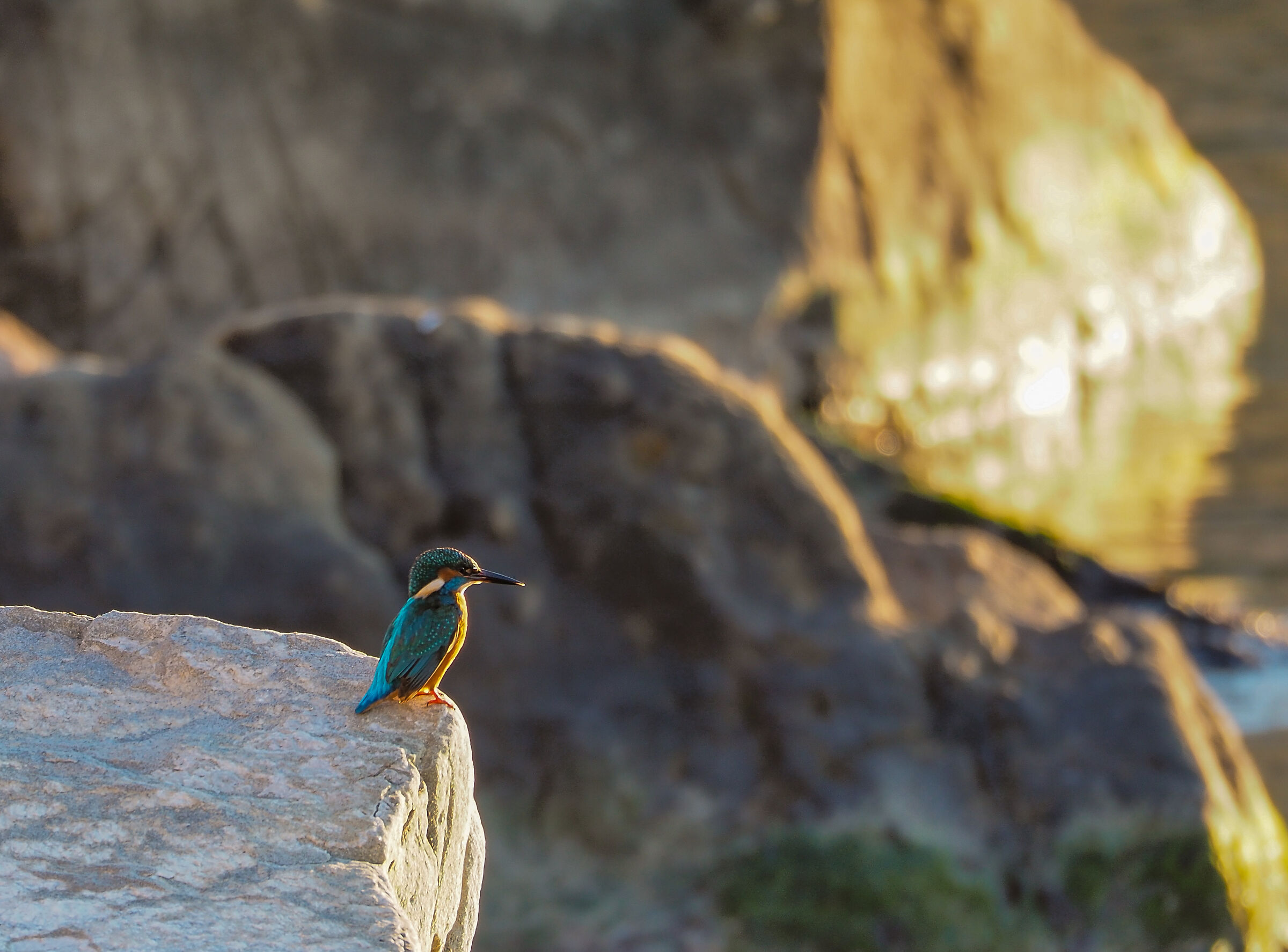My first kingfisher 2...