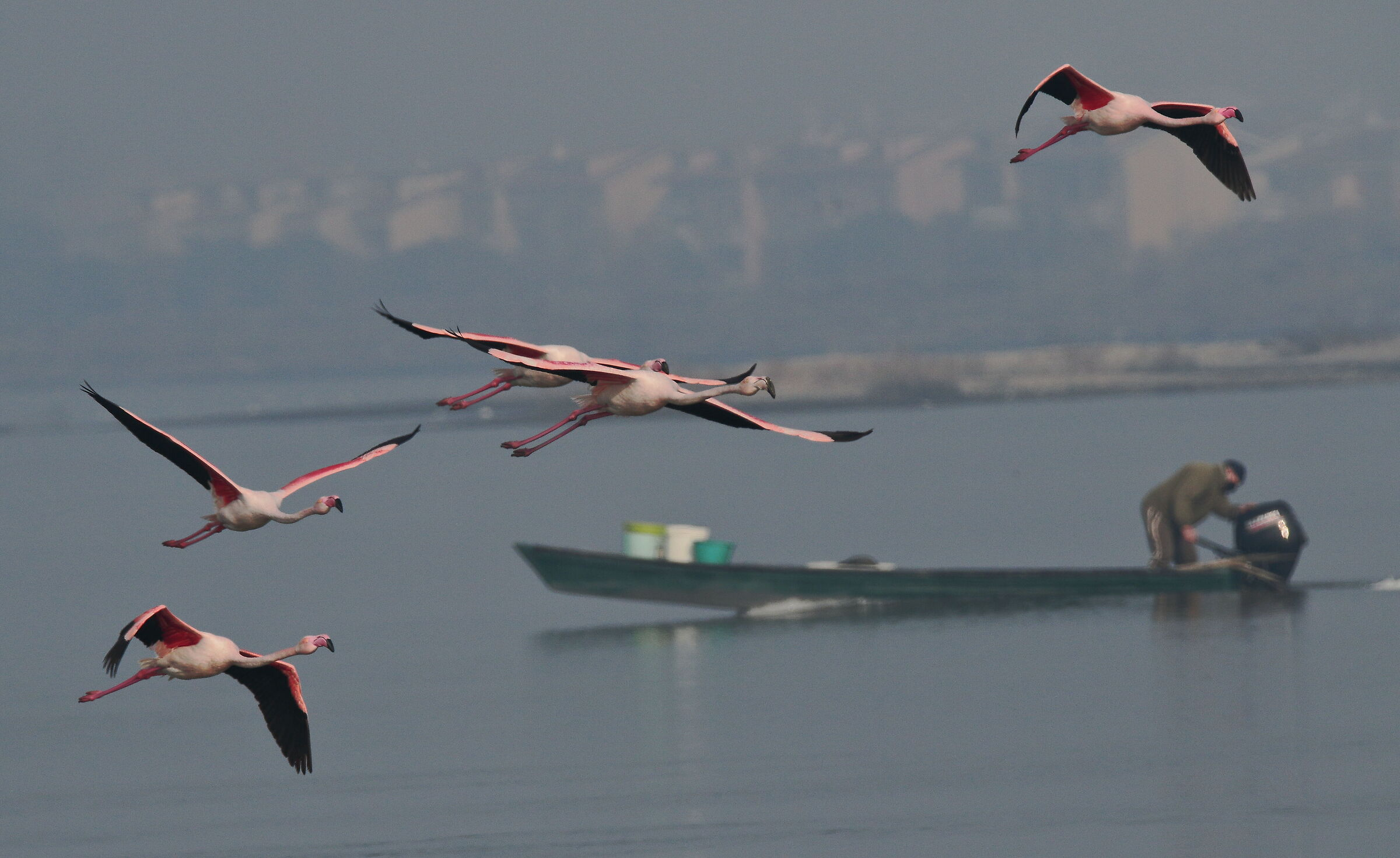 pink flamingos (valley environment)....
