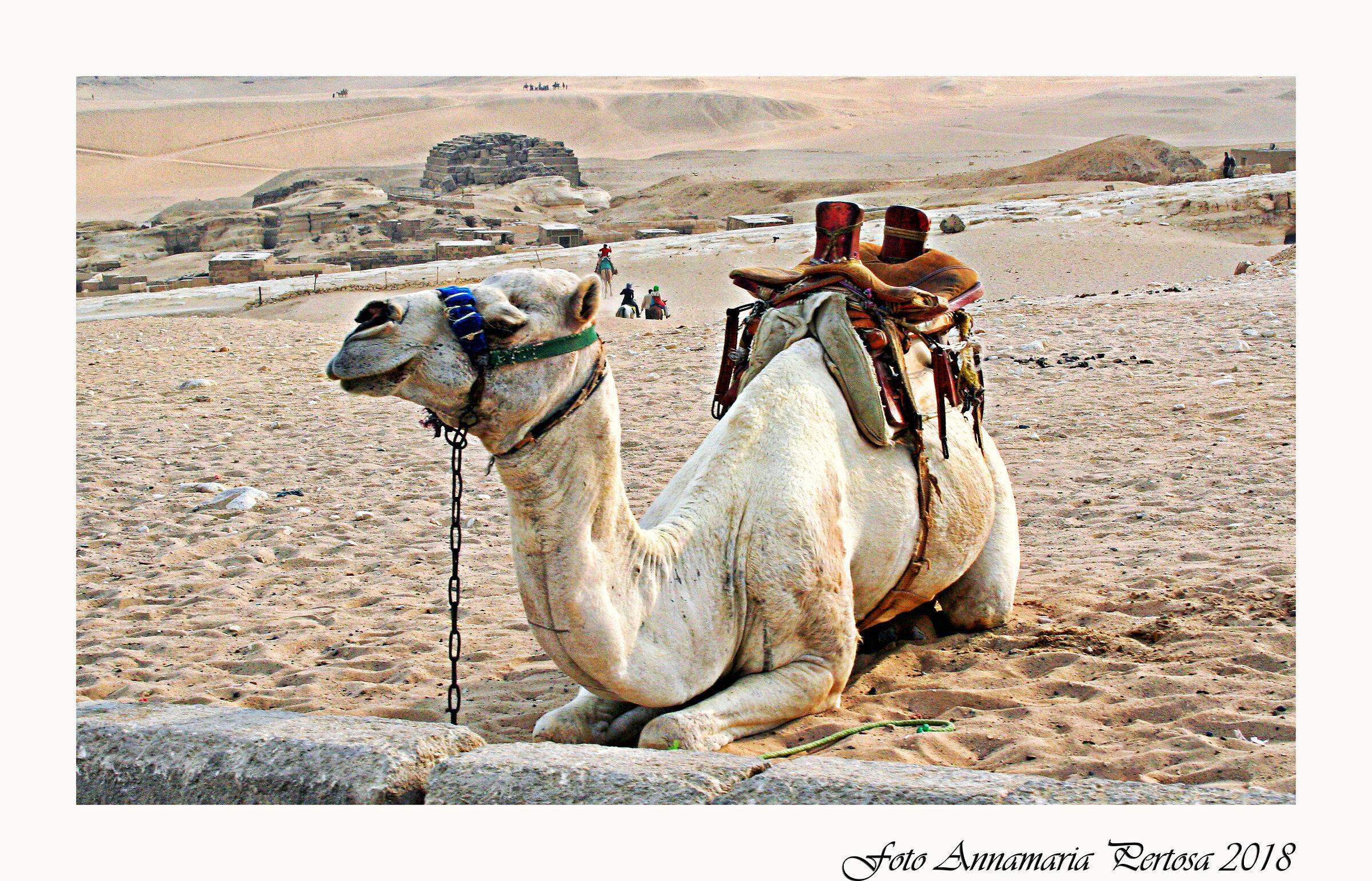 Giza a un passo dalle Piramidi...