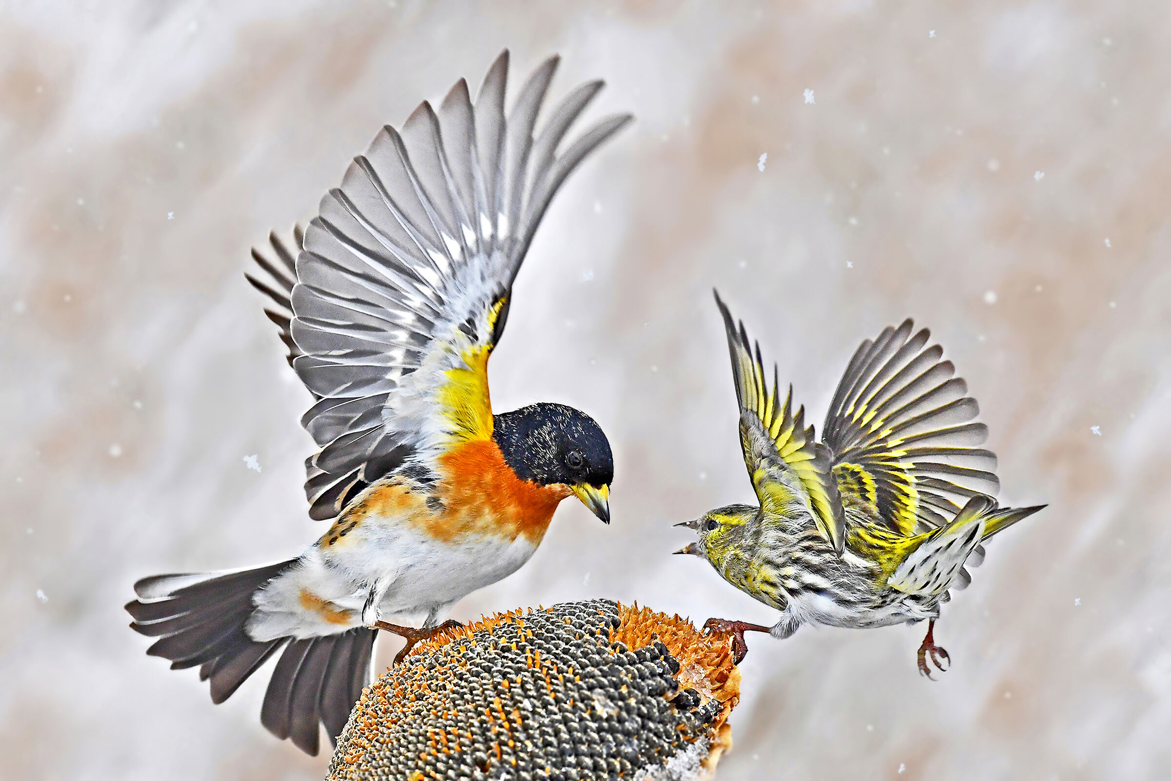 fight for food...