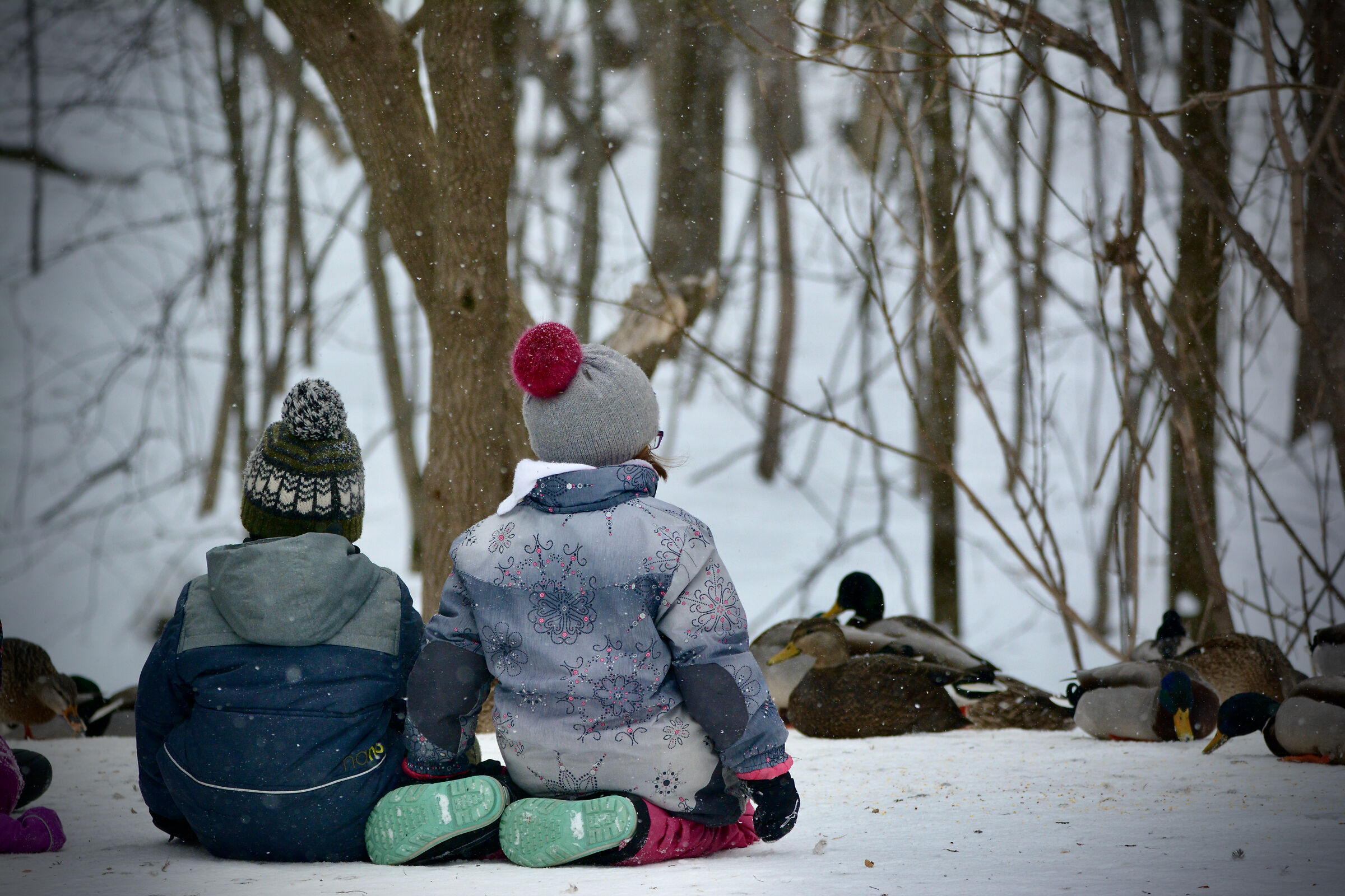 Children watch the ducks spectable in a park...