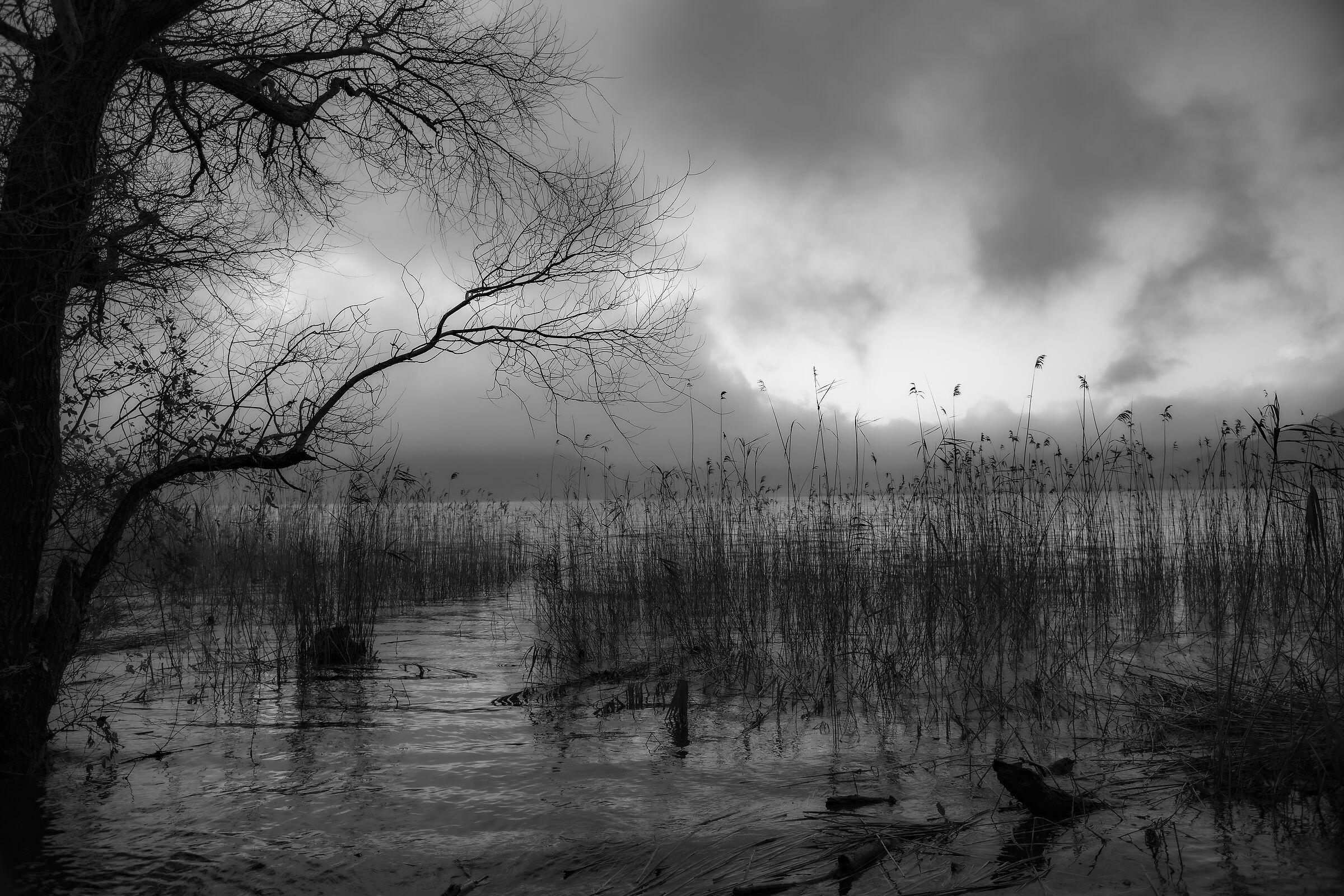 Lake Vico, details...