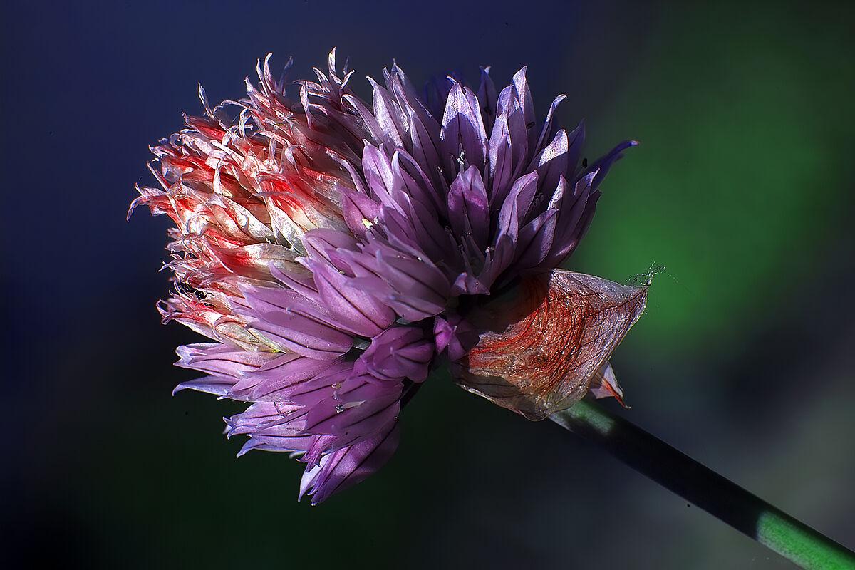 Multicolor.....