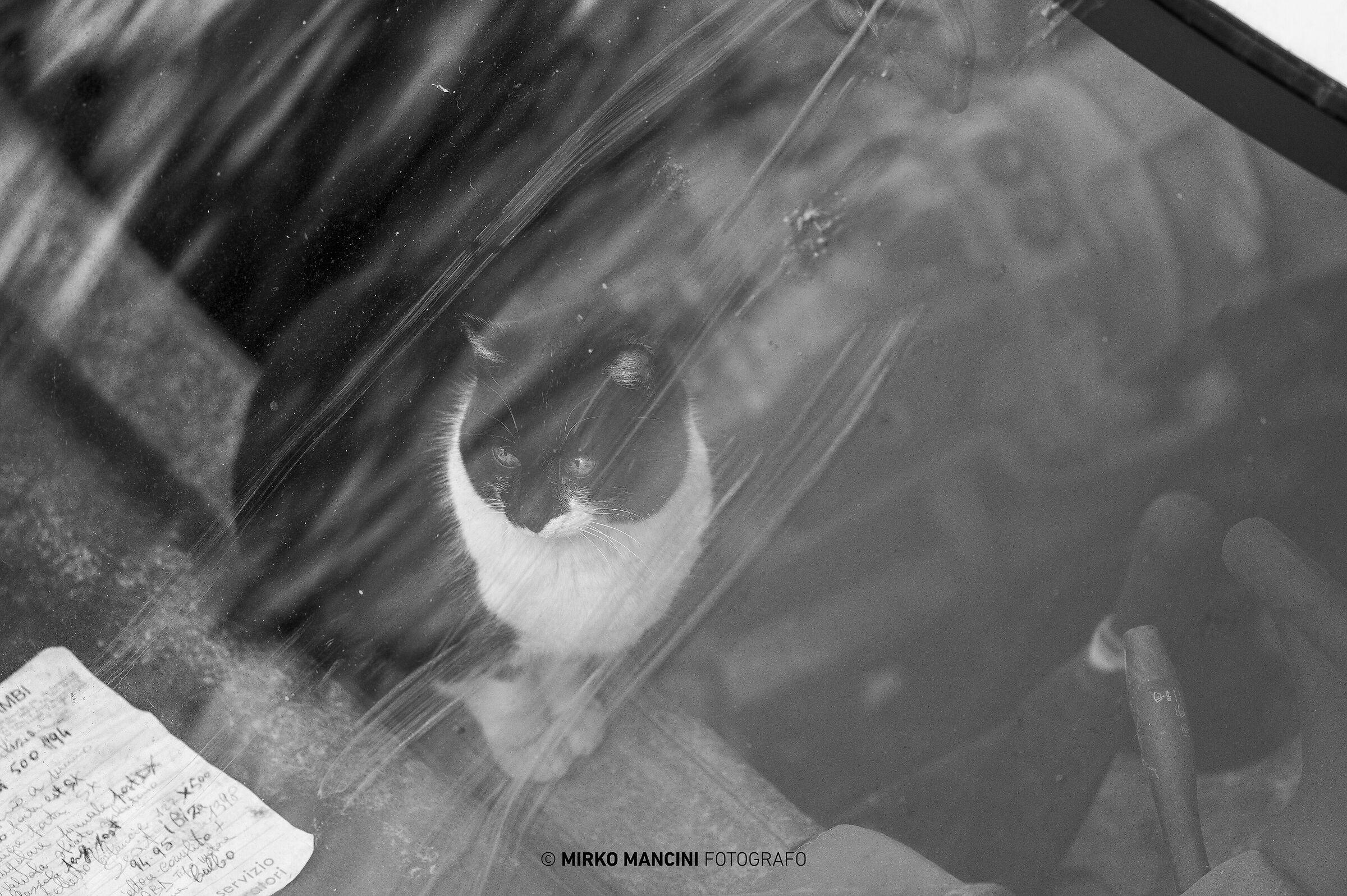 Il gatto del meccanico...