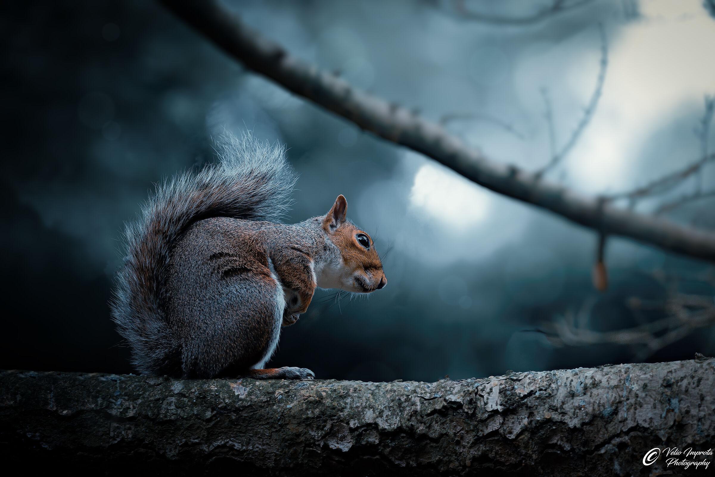 Mr. Squirrel...