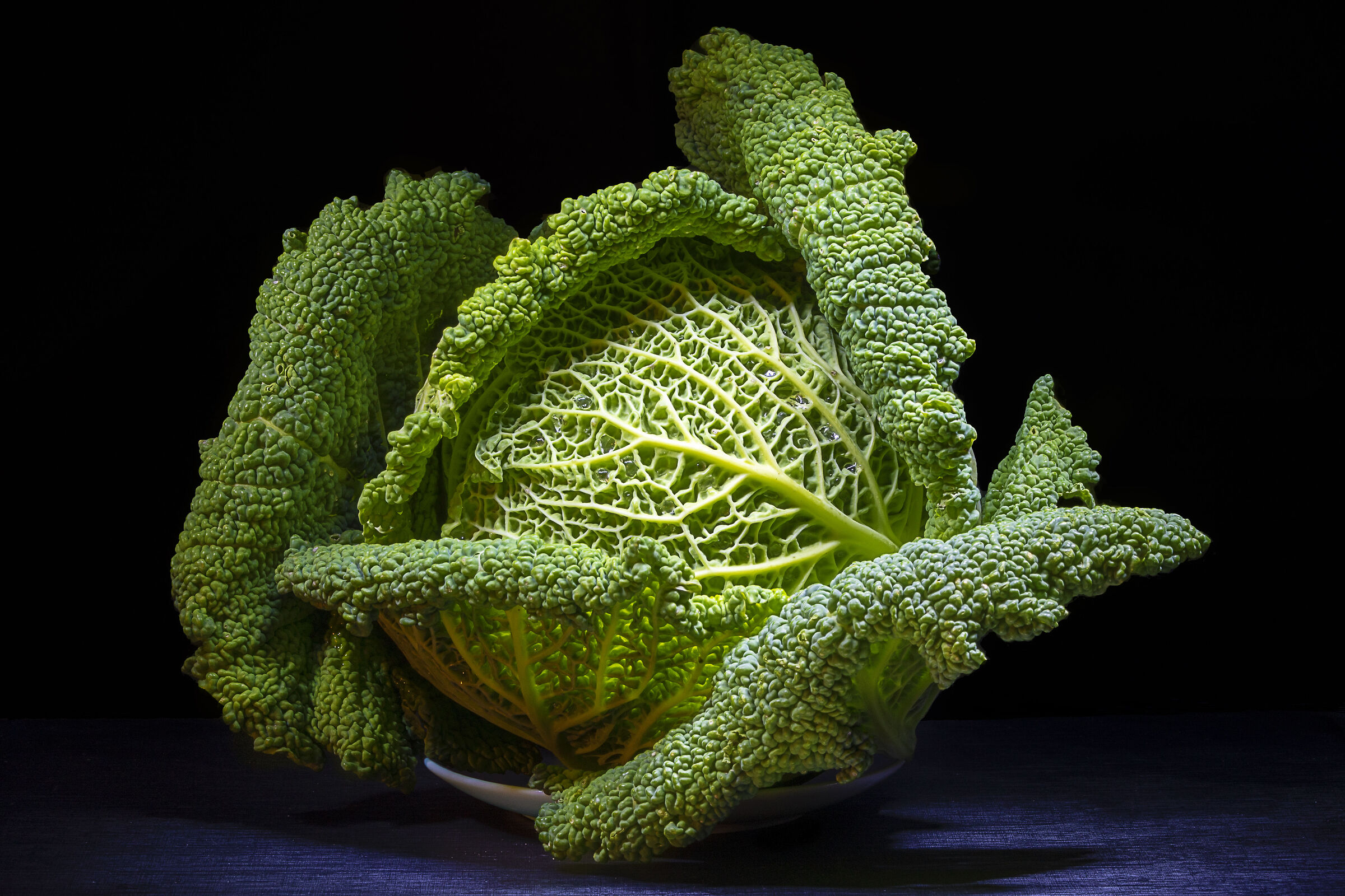 A cabbage to photograph...