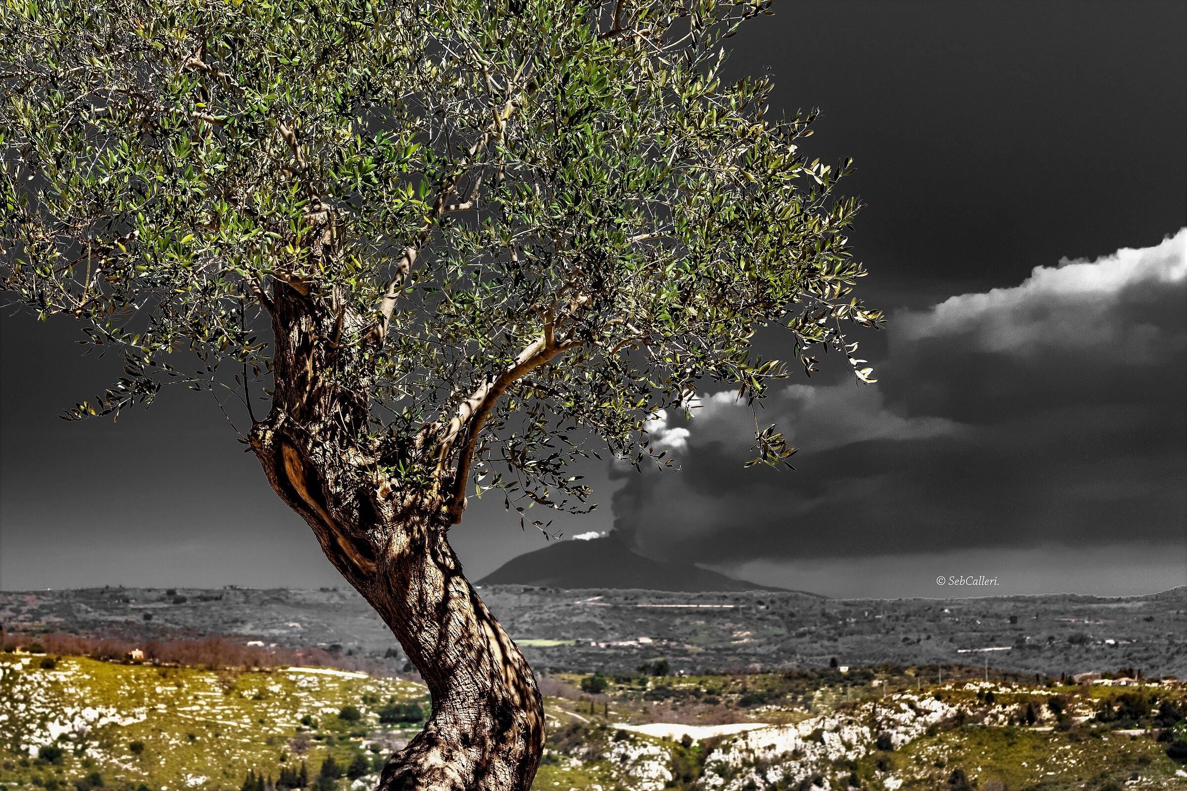 The olive tree of peace and the roar of the Giant......