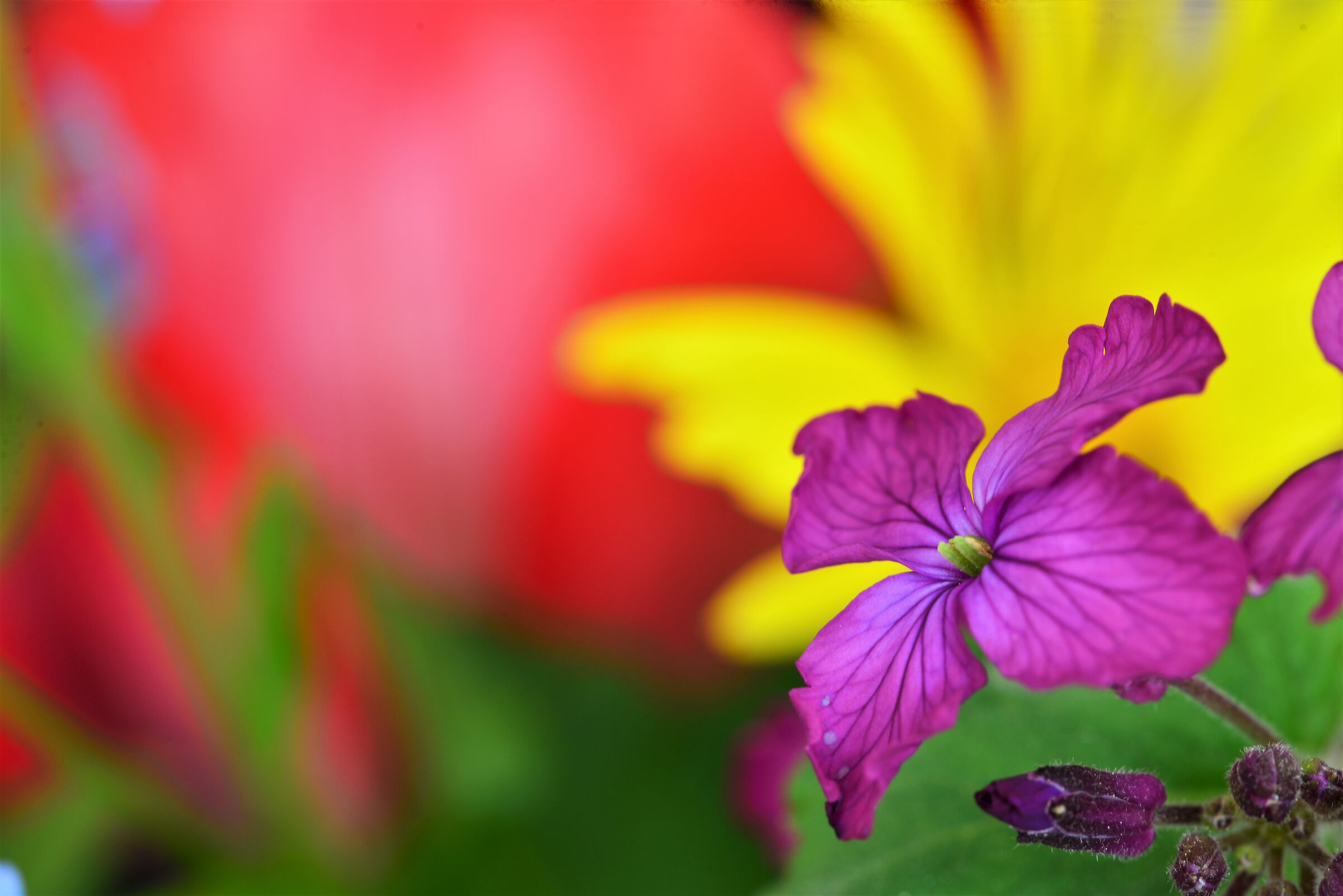 Color and spring...