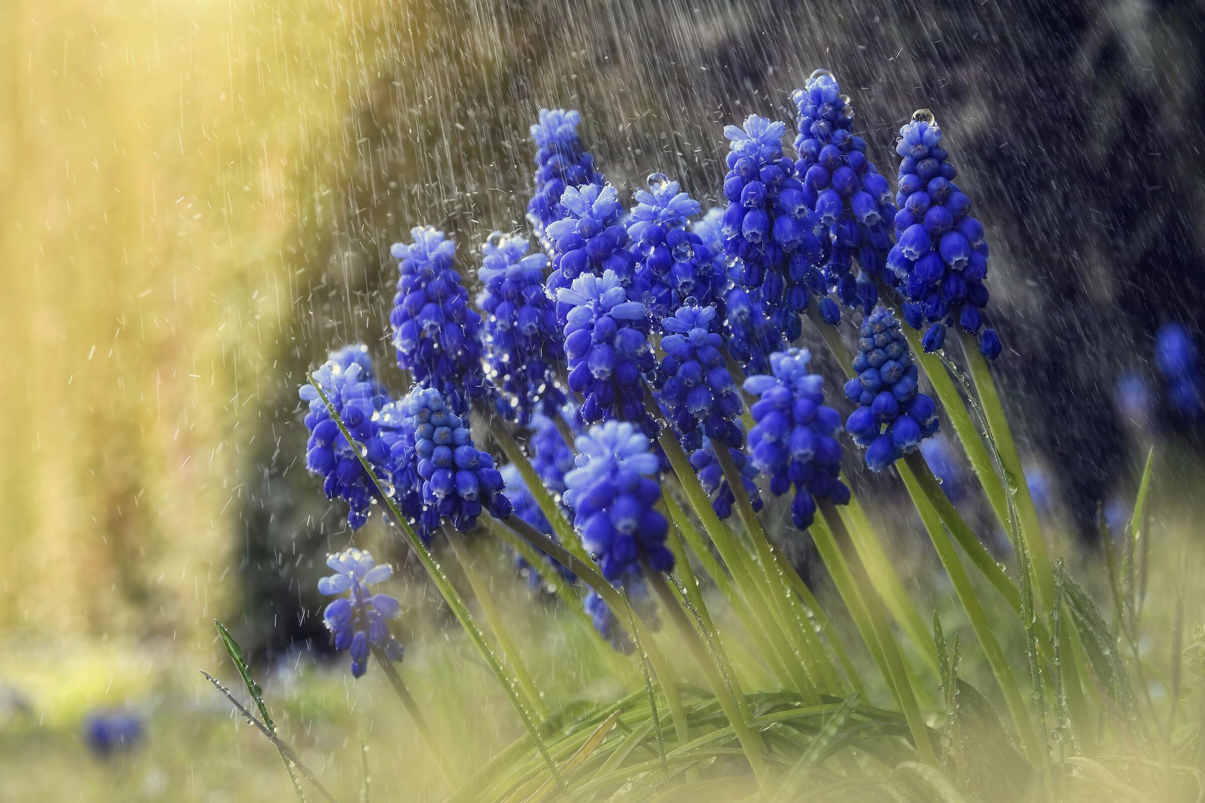 The Rain in the Garden...