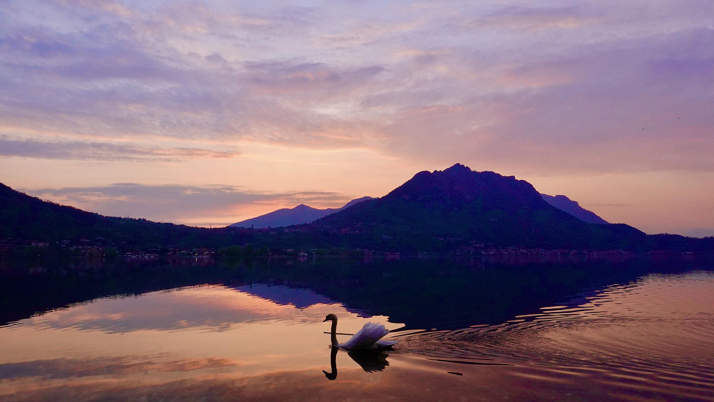 Tramonto sul lago con cigno...