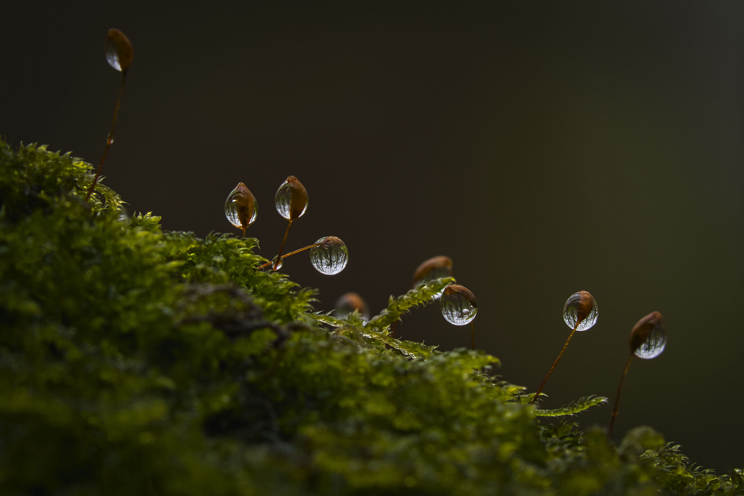 Reverse world - in water droplets...