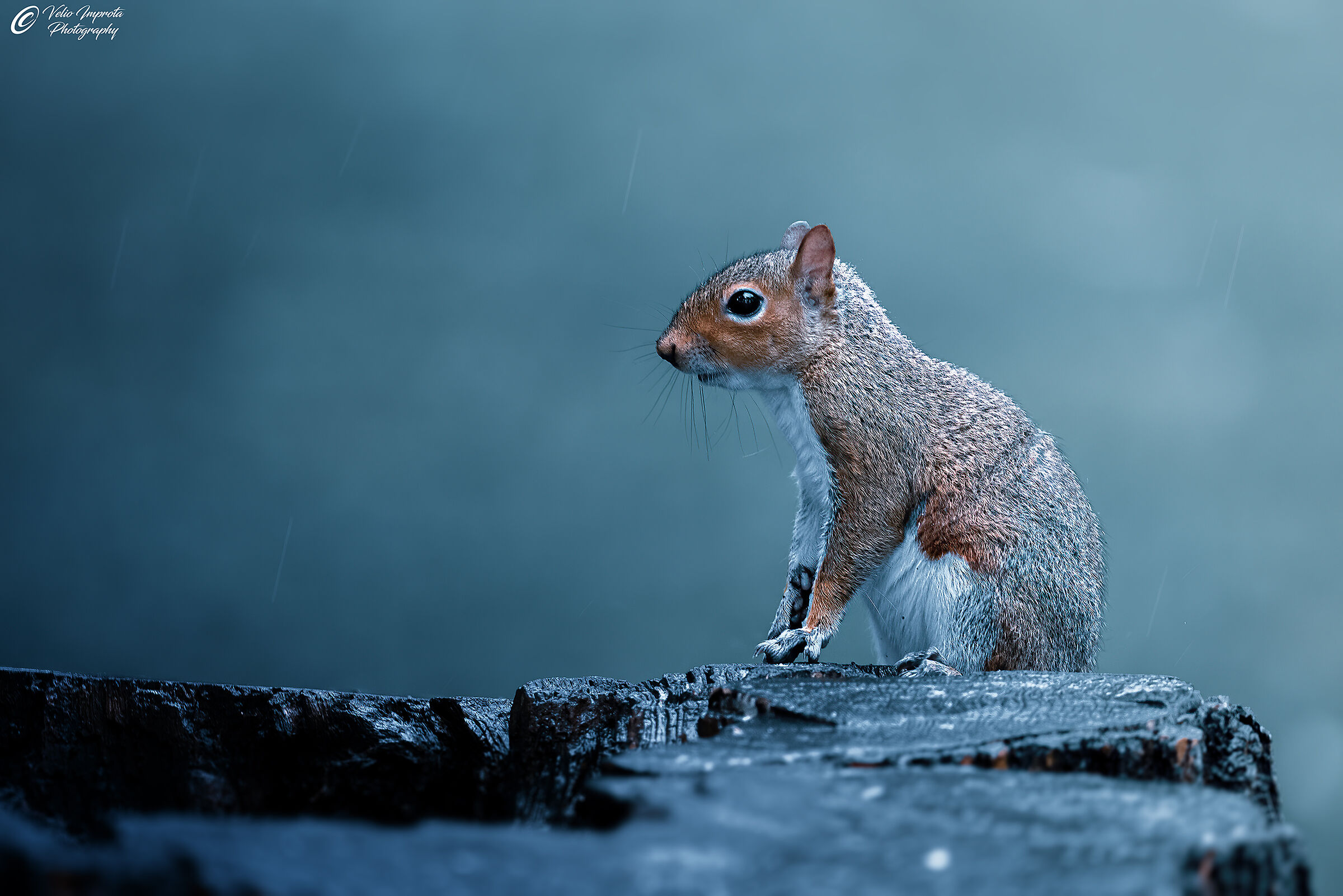 Getting wet in the rain...