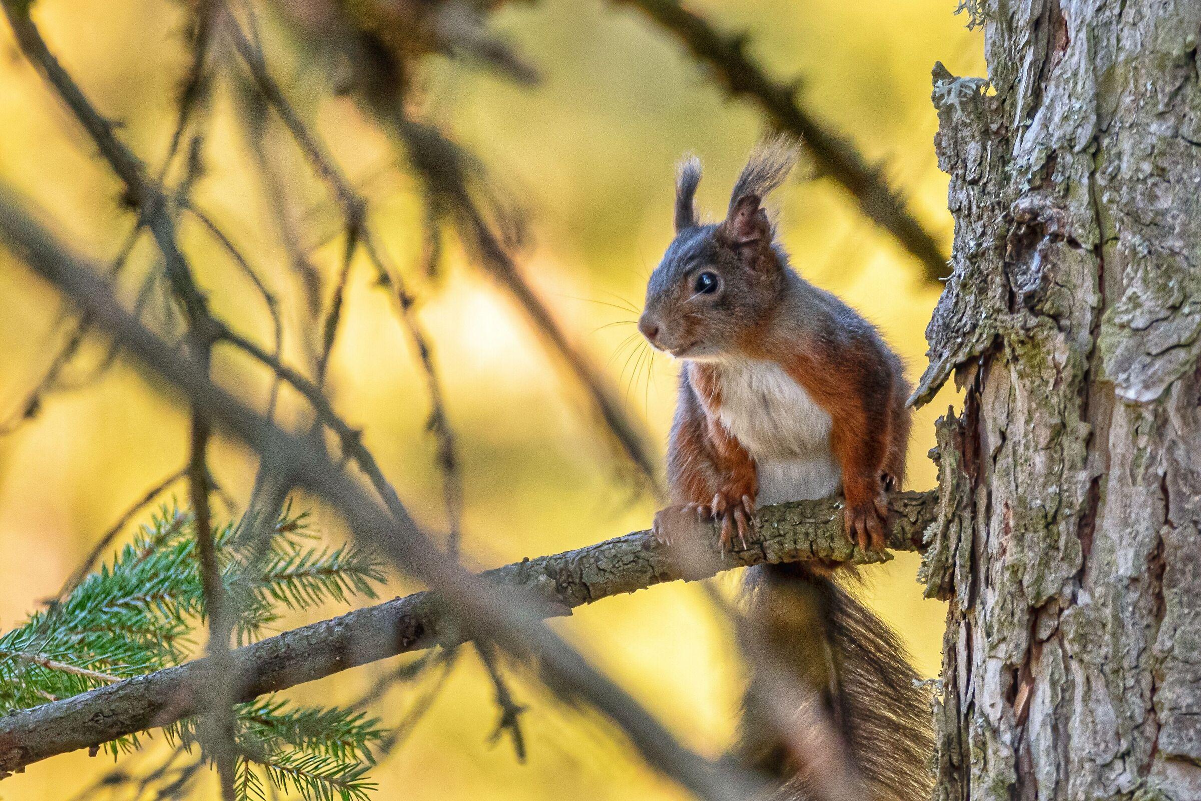 Curious squirrel...
