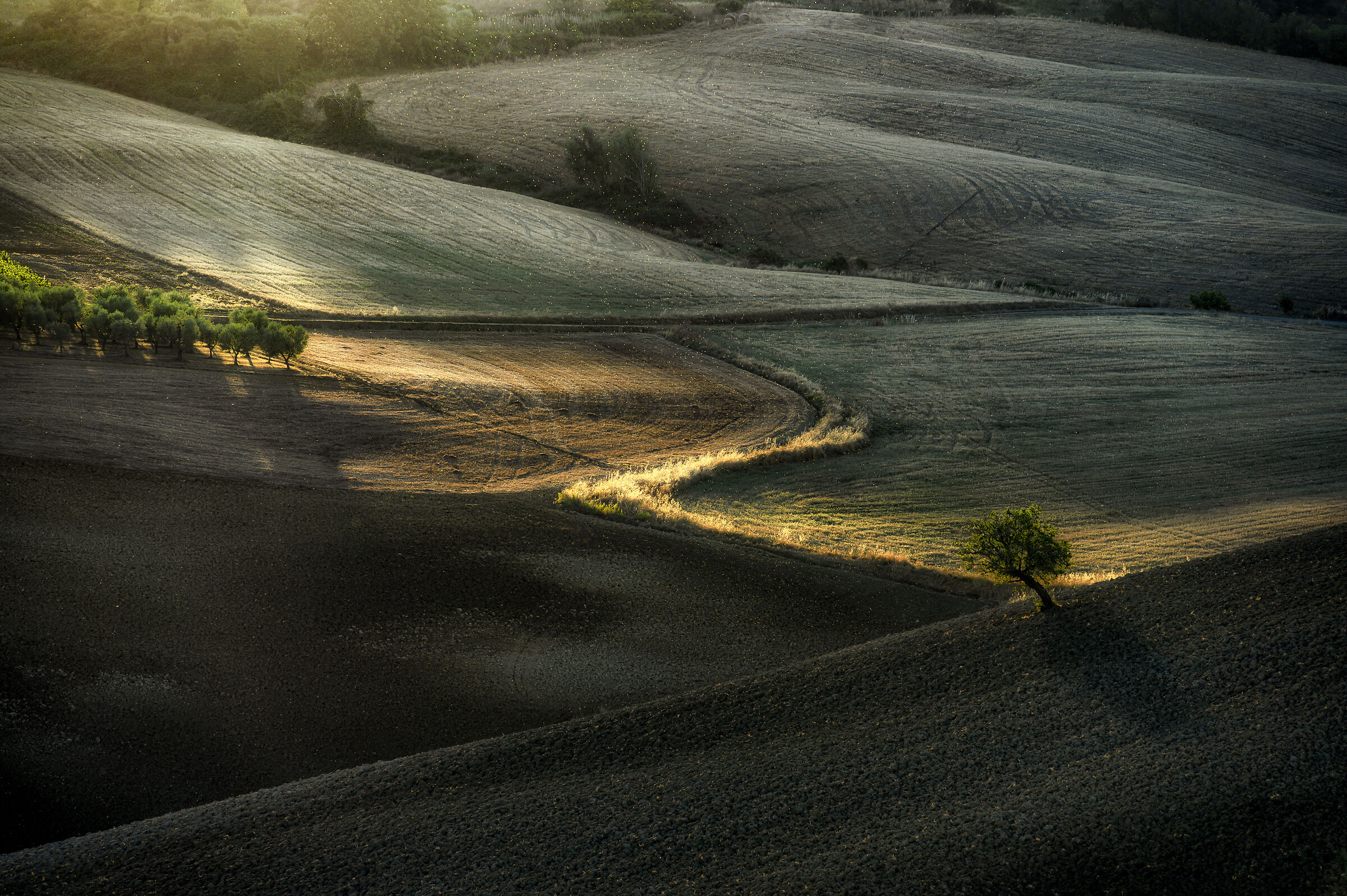 Sunrise in Val d'Orcia with butterflies in flight...