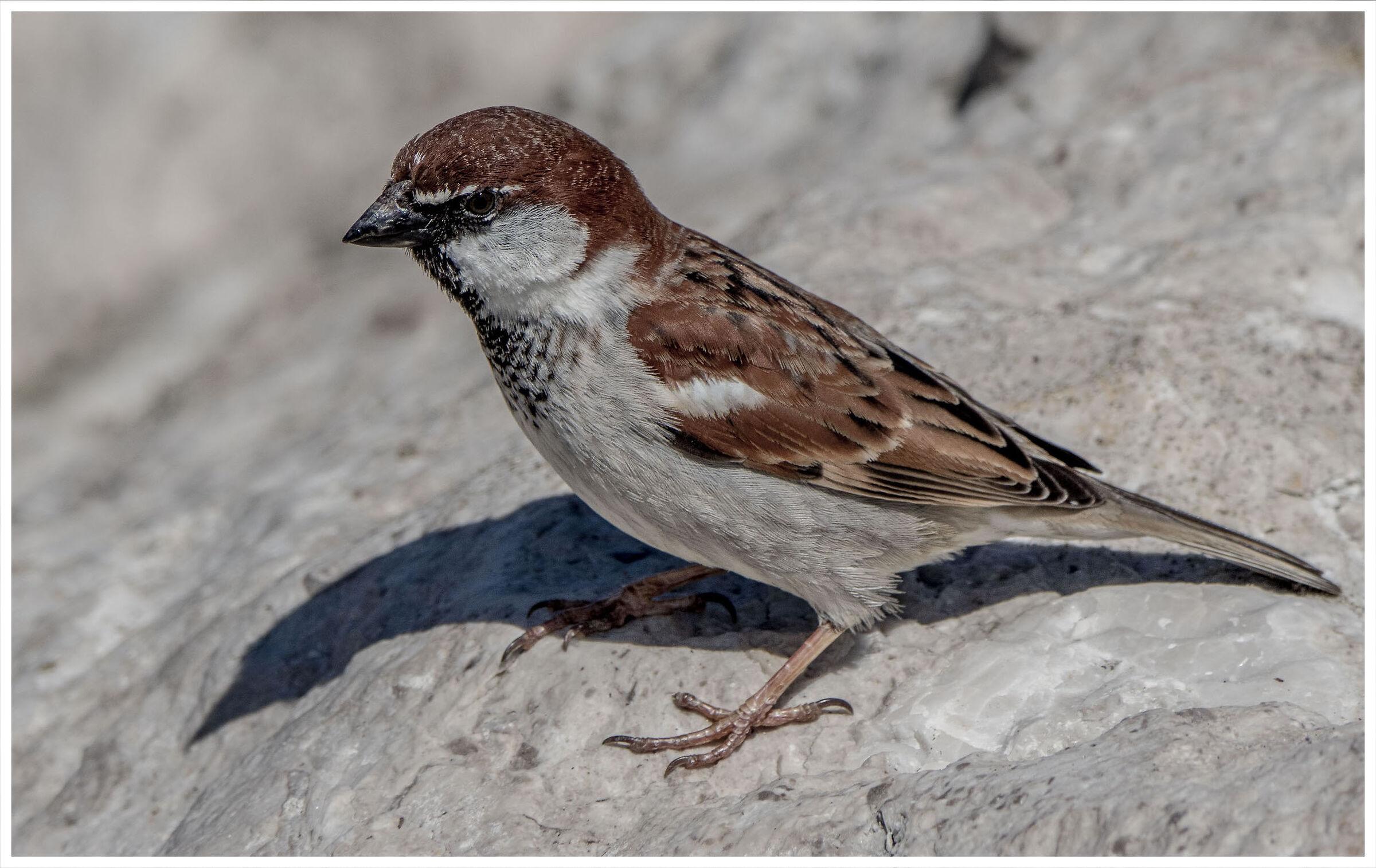 sparrow by the sea...