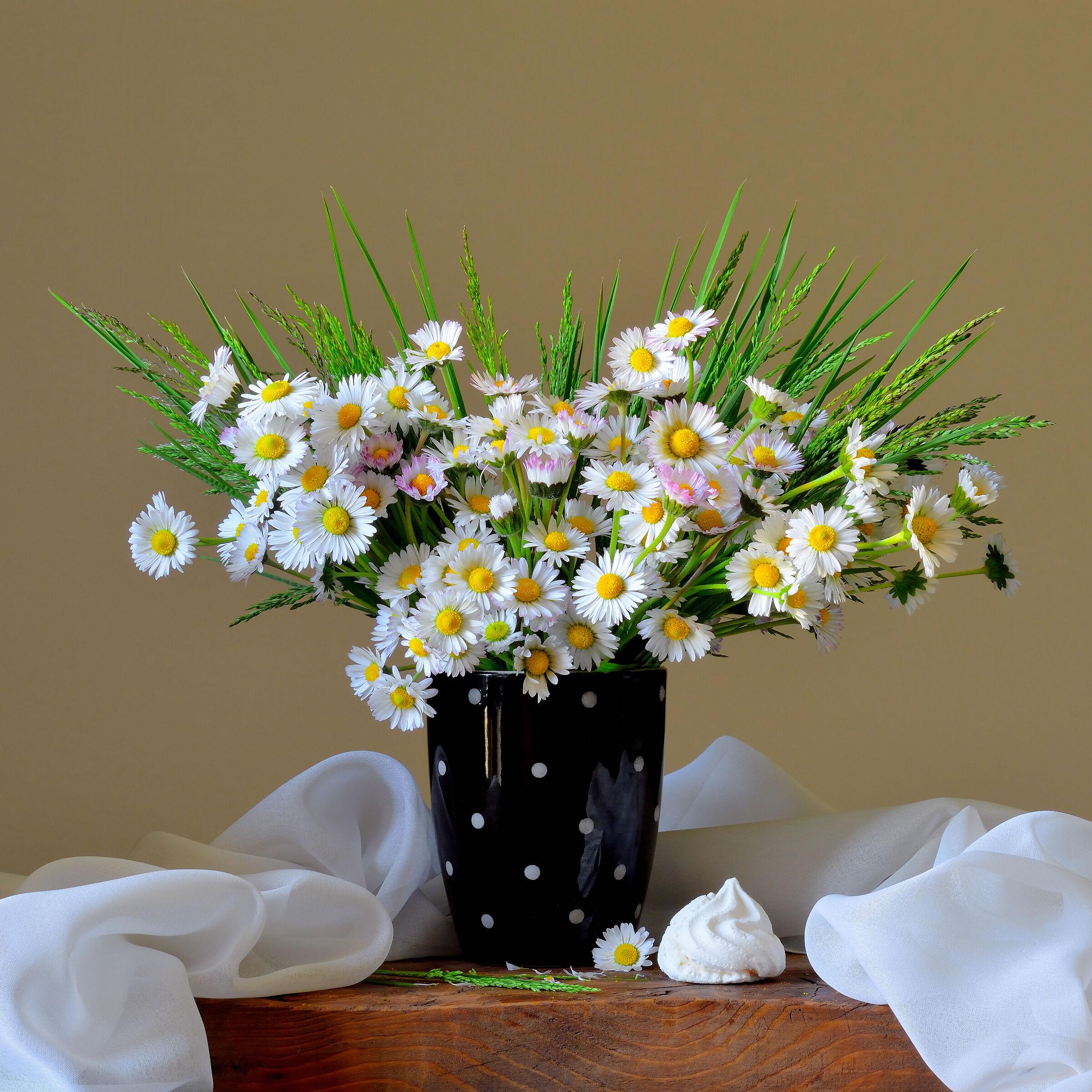 daisys...