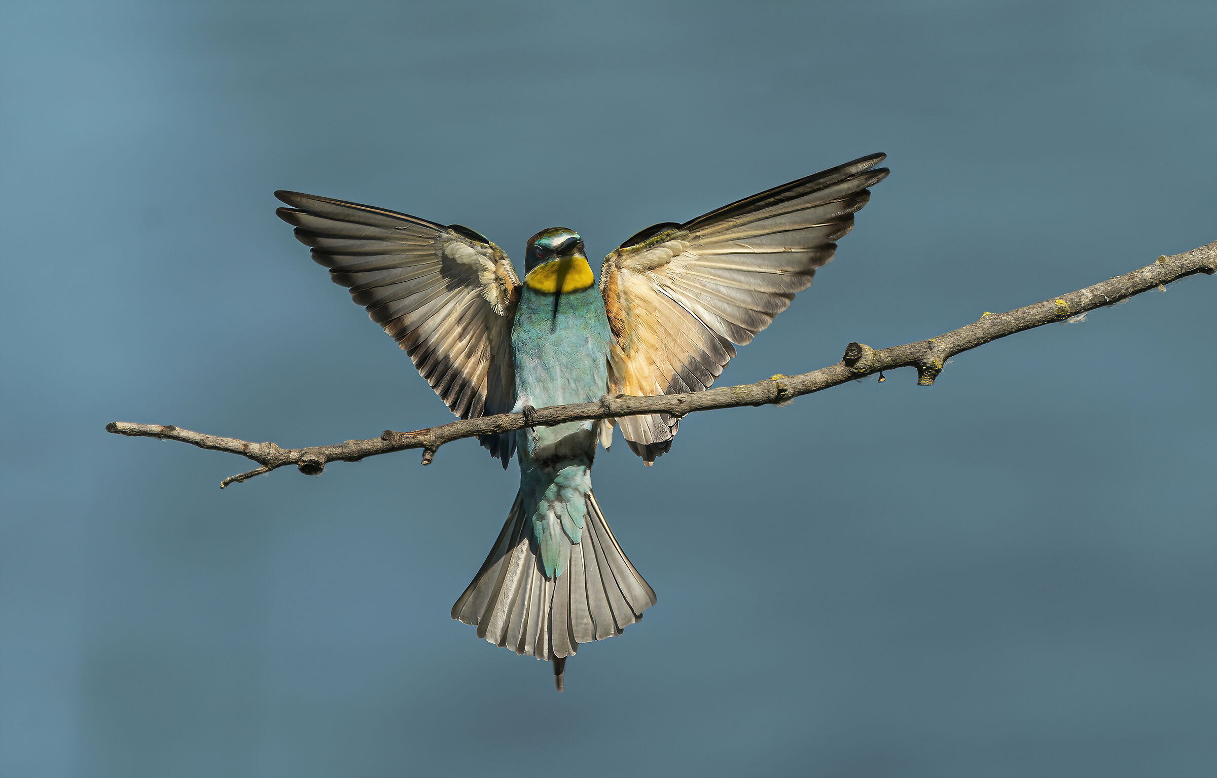 bee-eater...