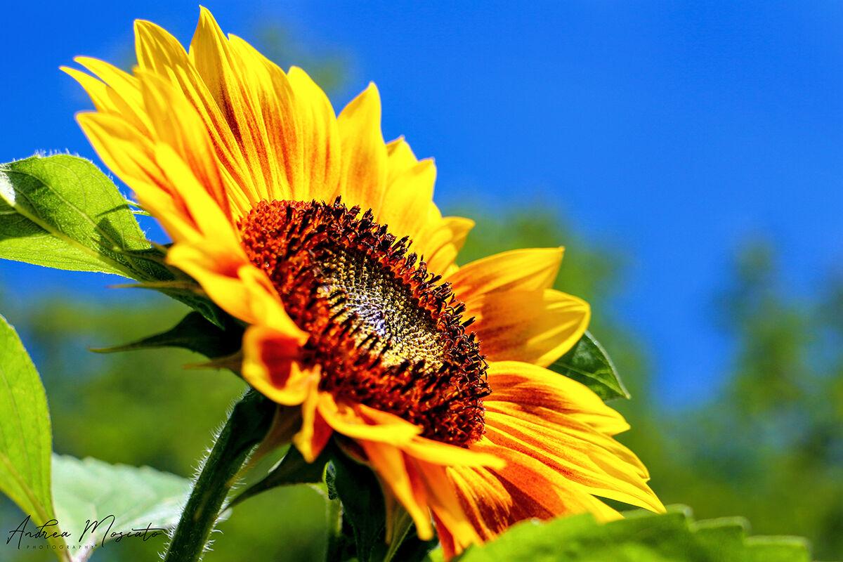 Yellow Sun...