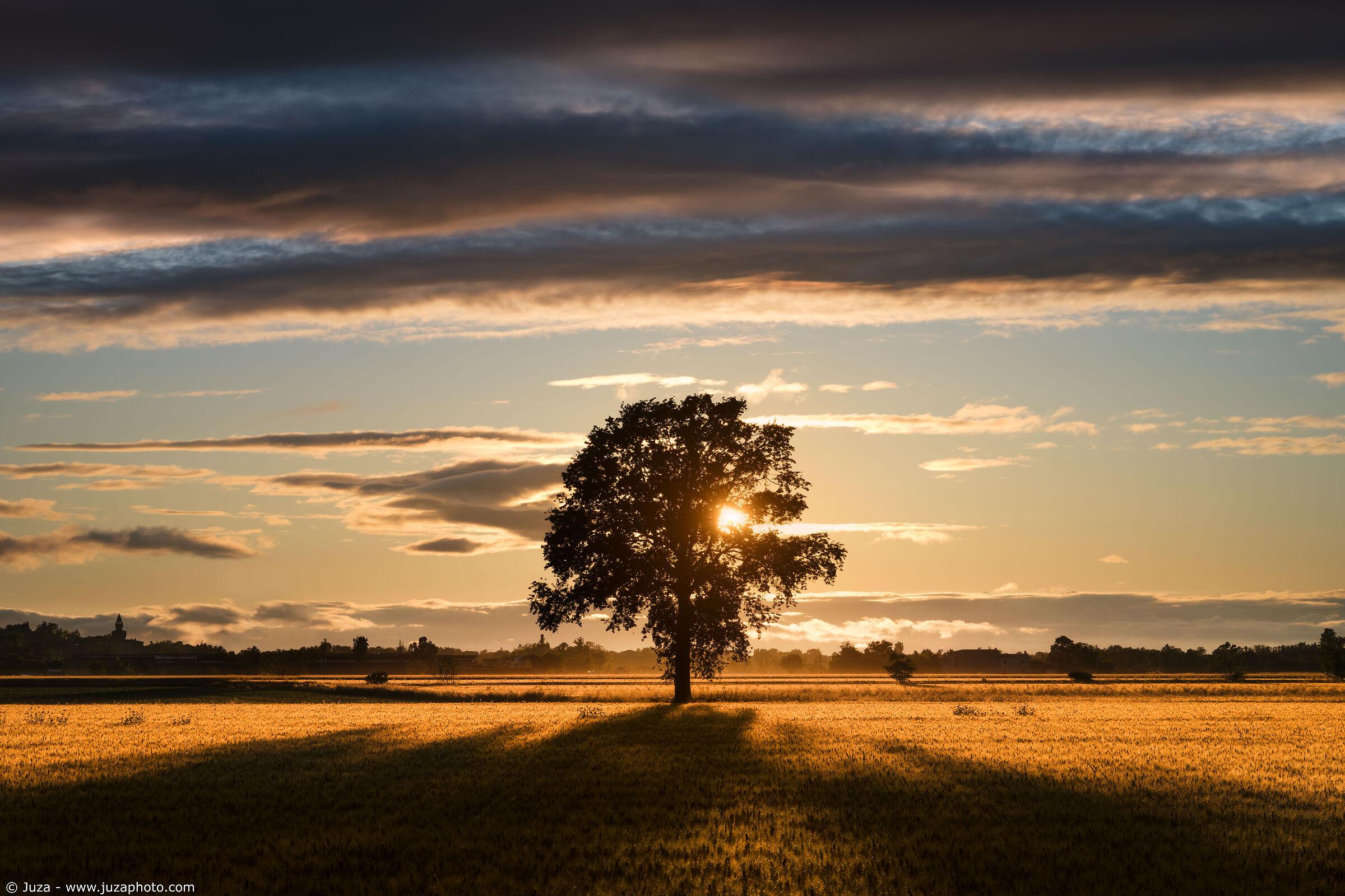 Tramonto sui campi di grano...