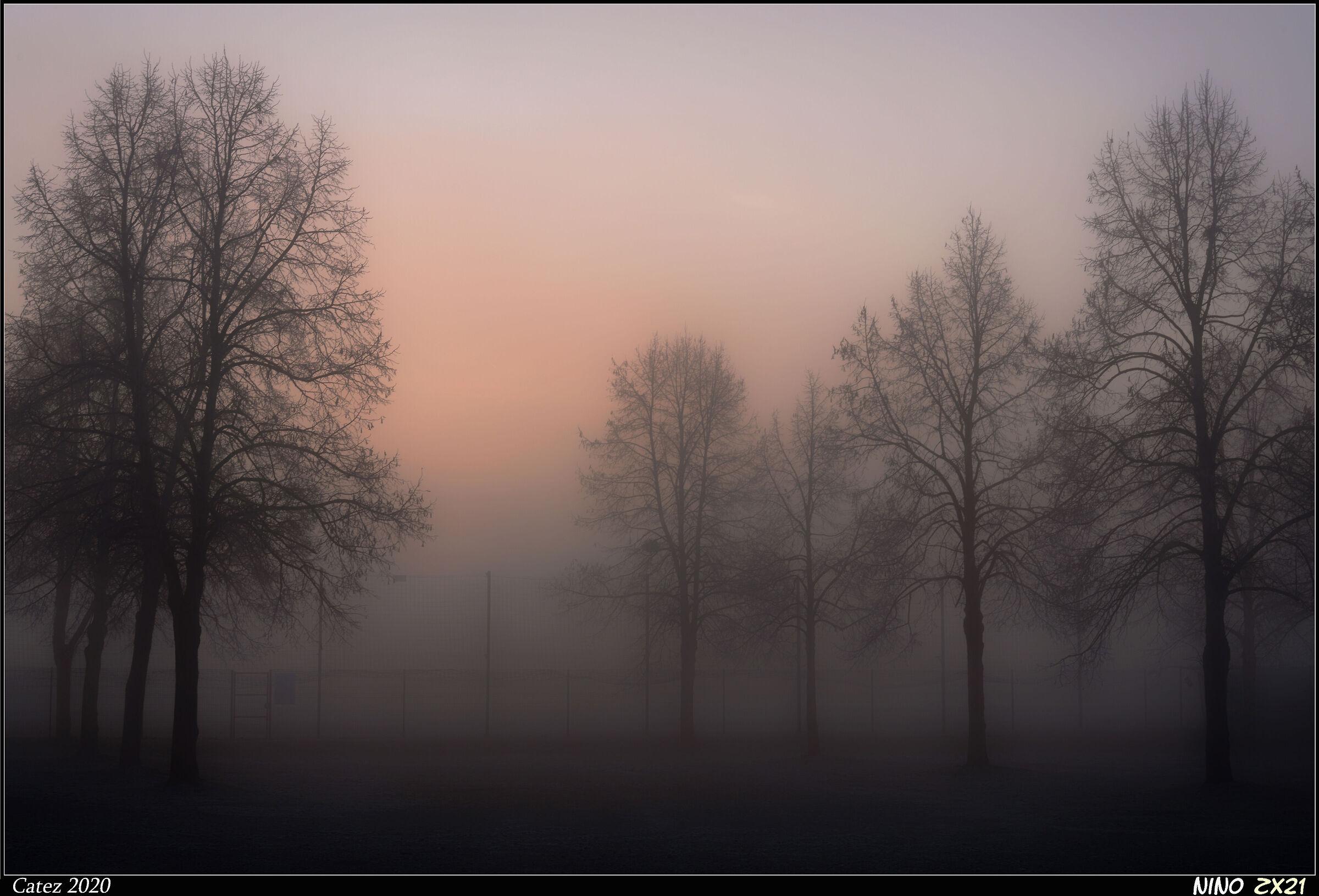 Nebbia mattutina...