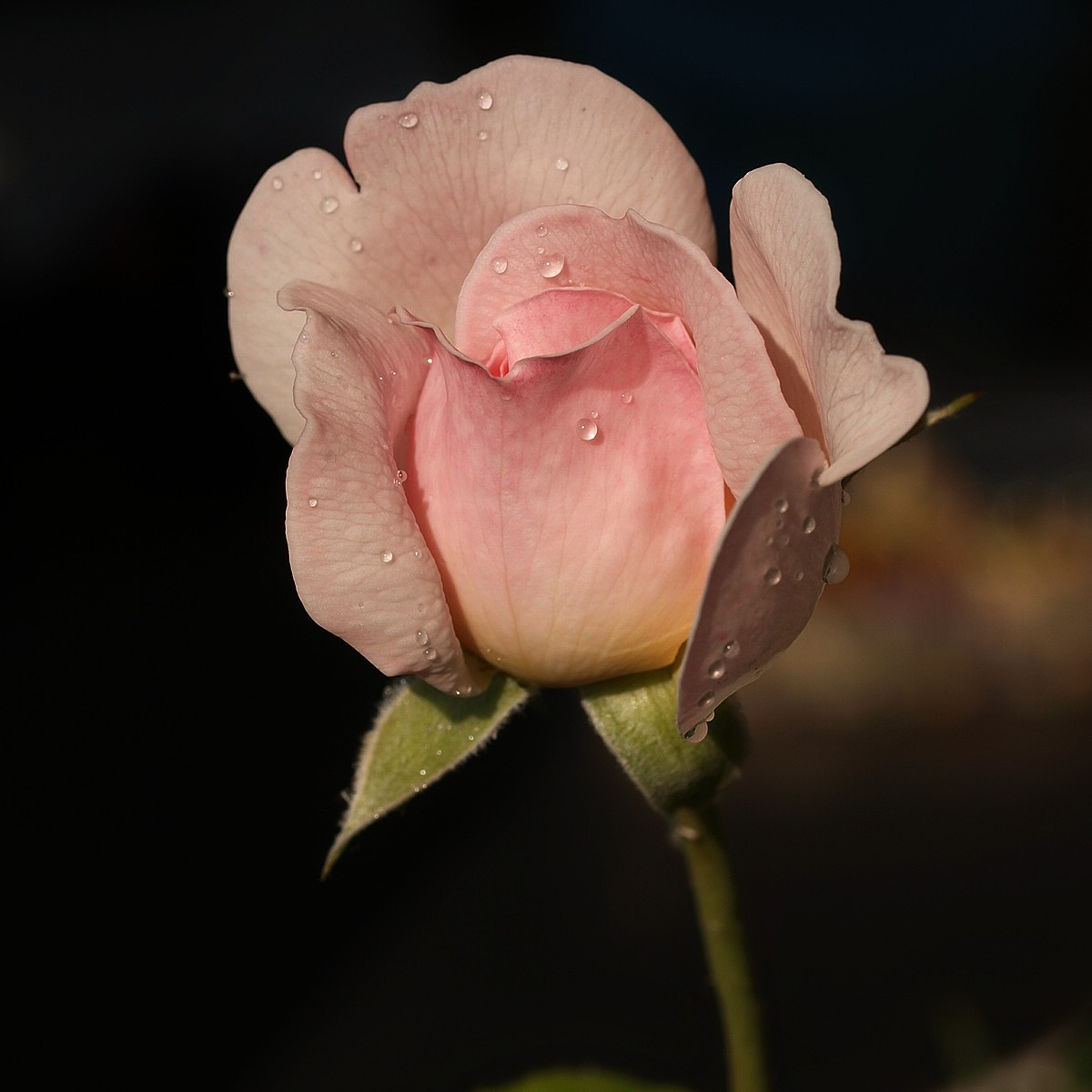 scented pink...