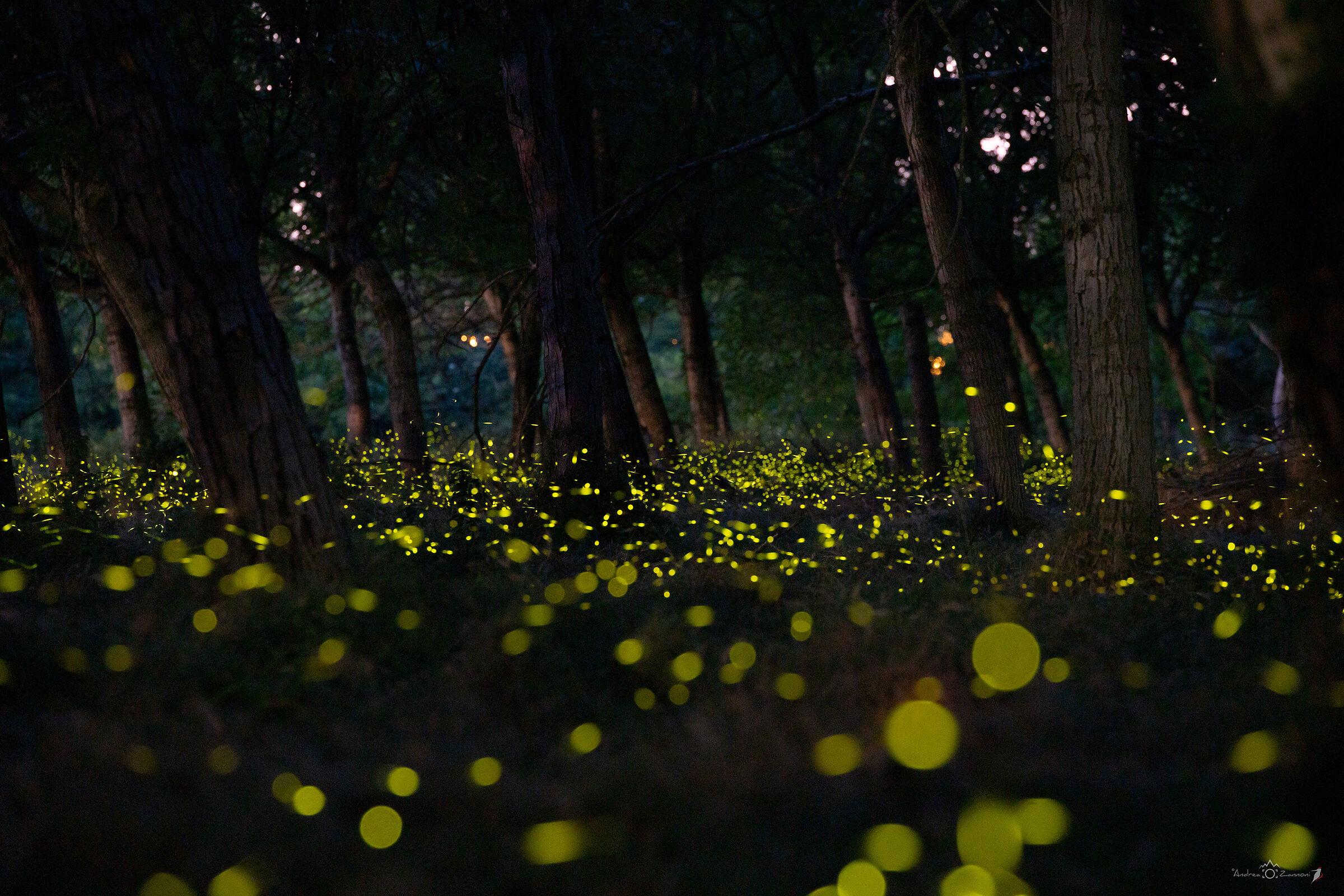 Fireflies...