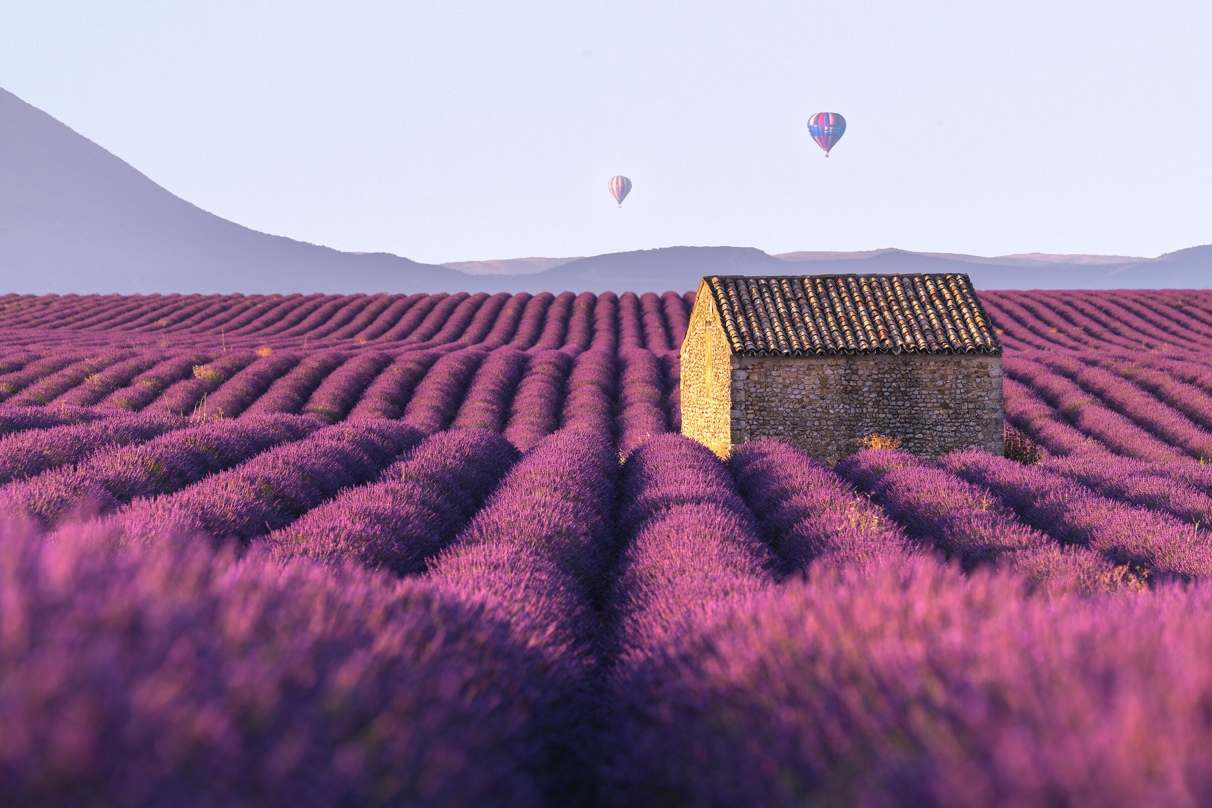 Did you say Lavender?...