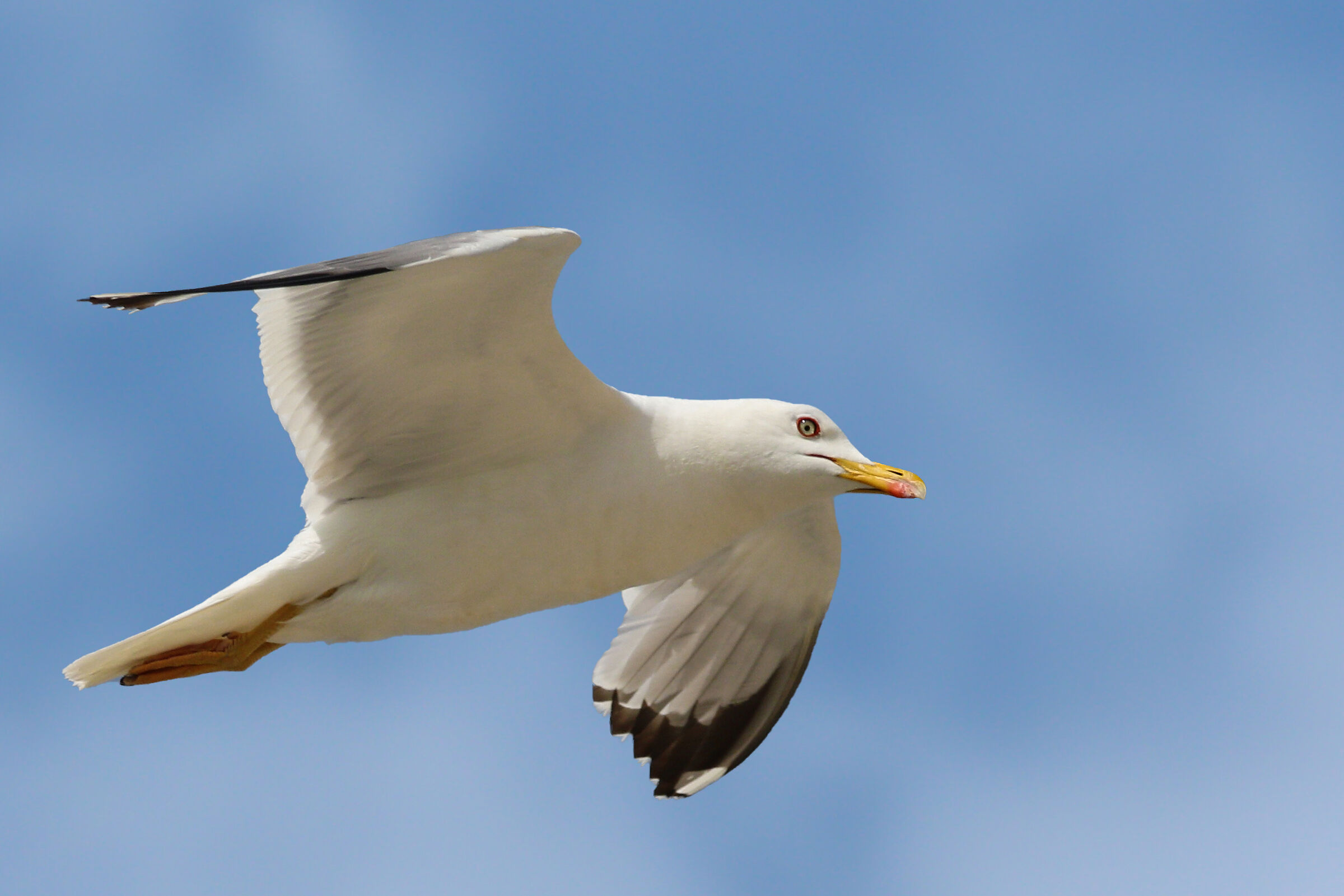 The Eye of the Seagull...