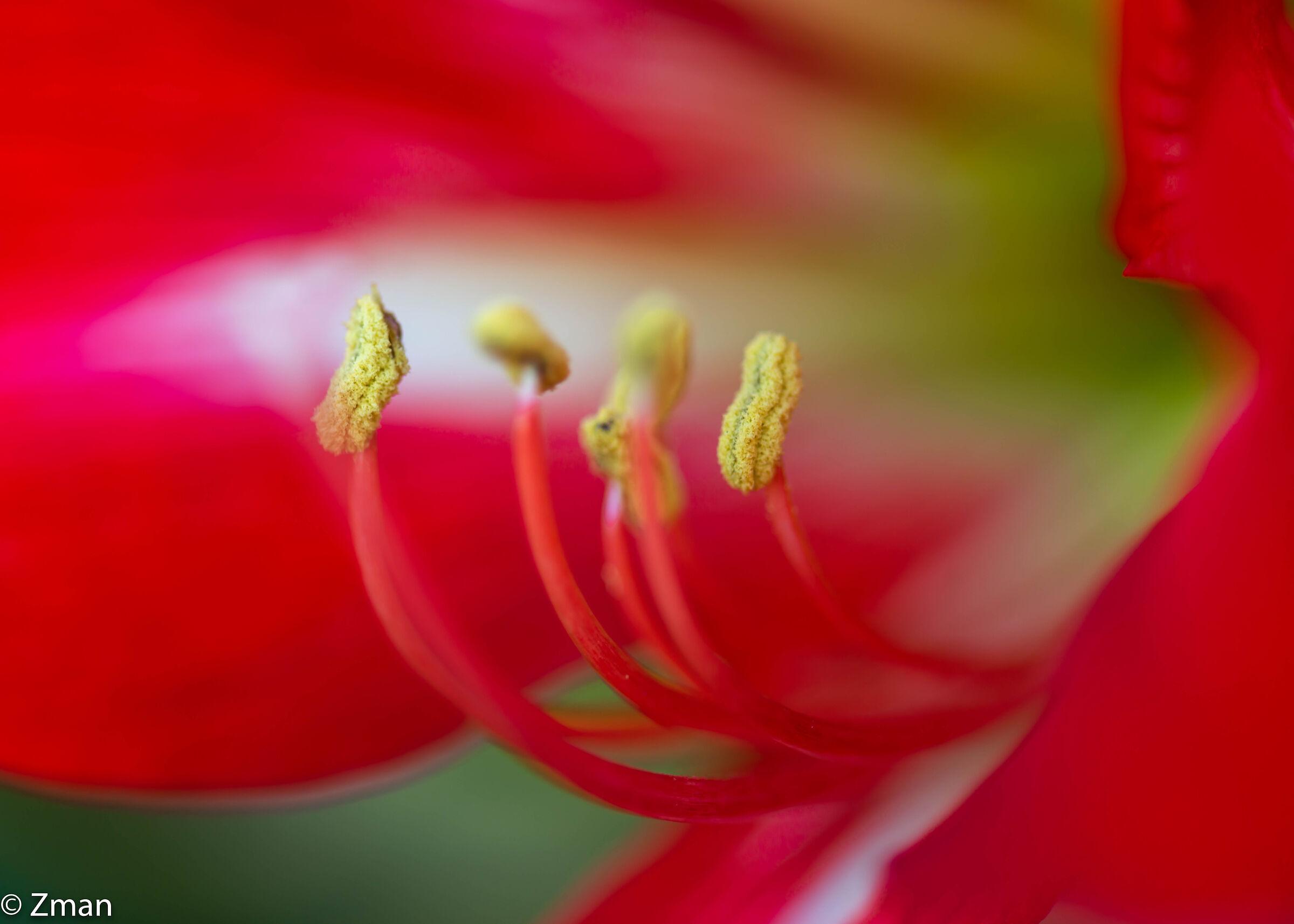 Lillies...