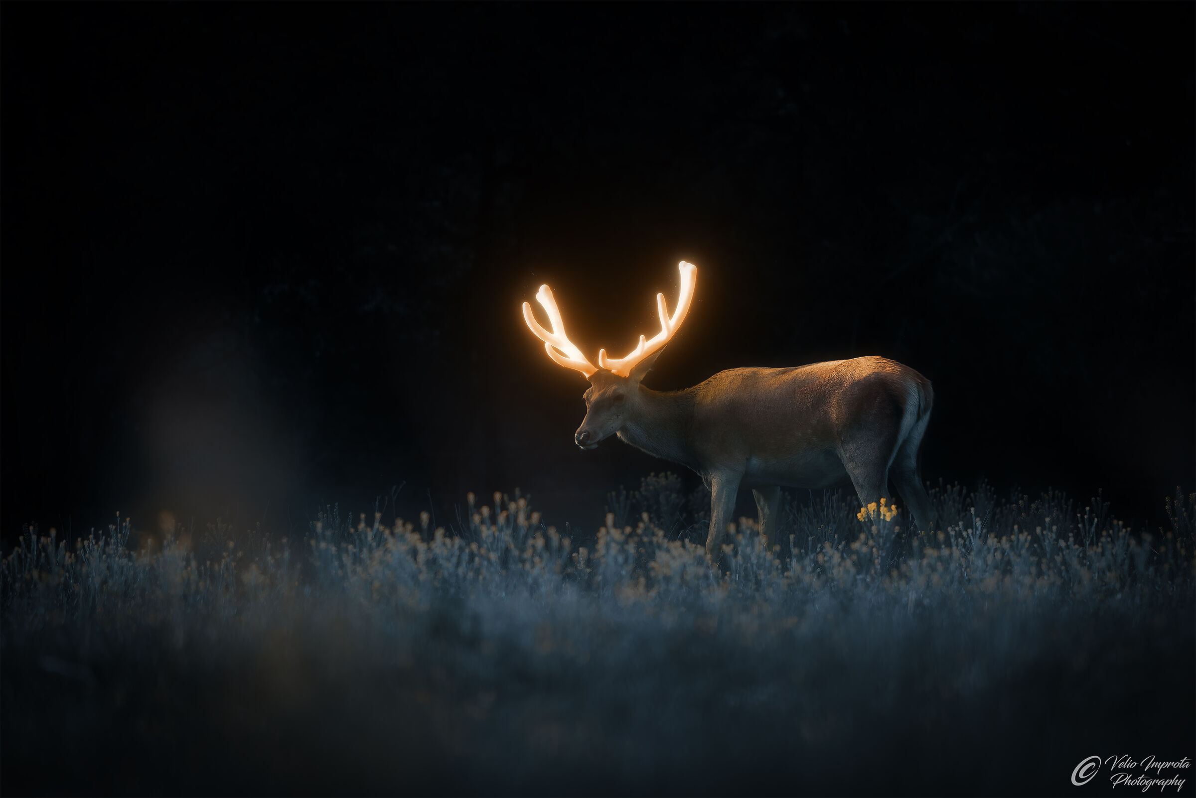 The glow of the antlers...