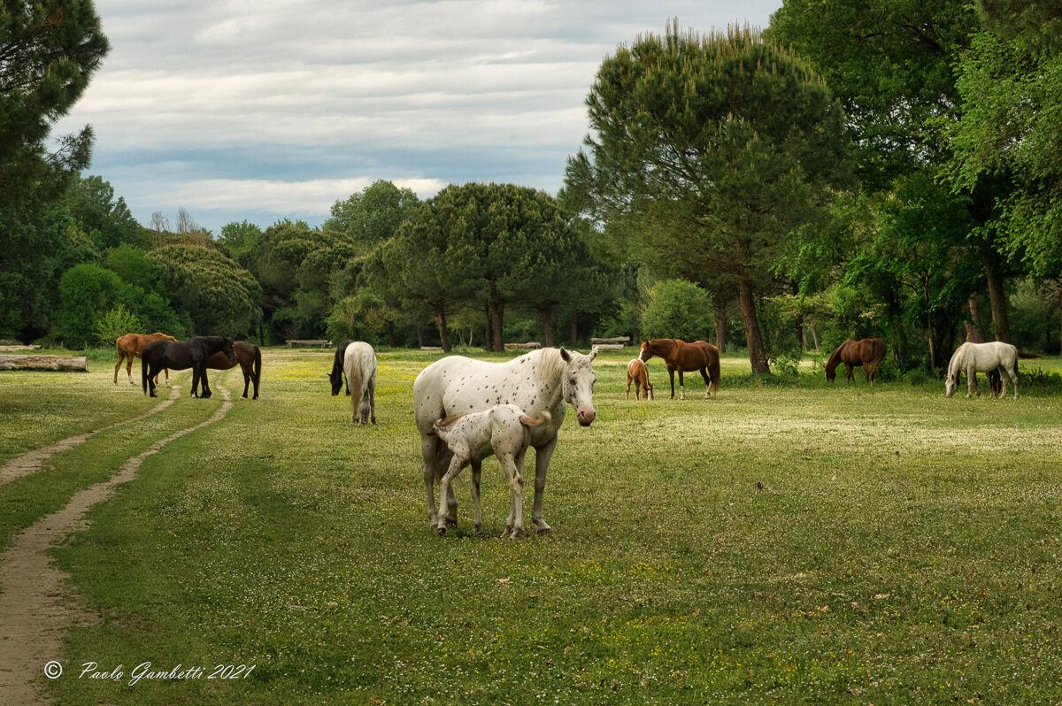 Herd life...