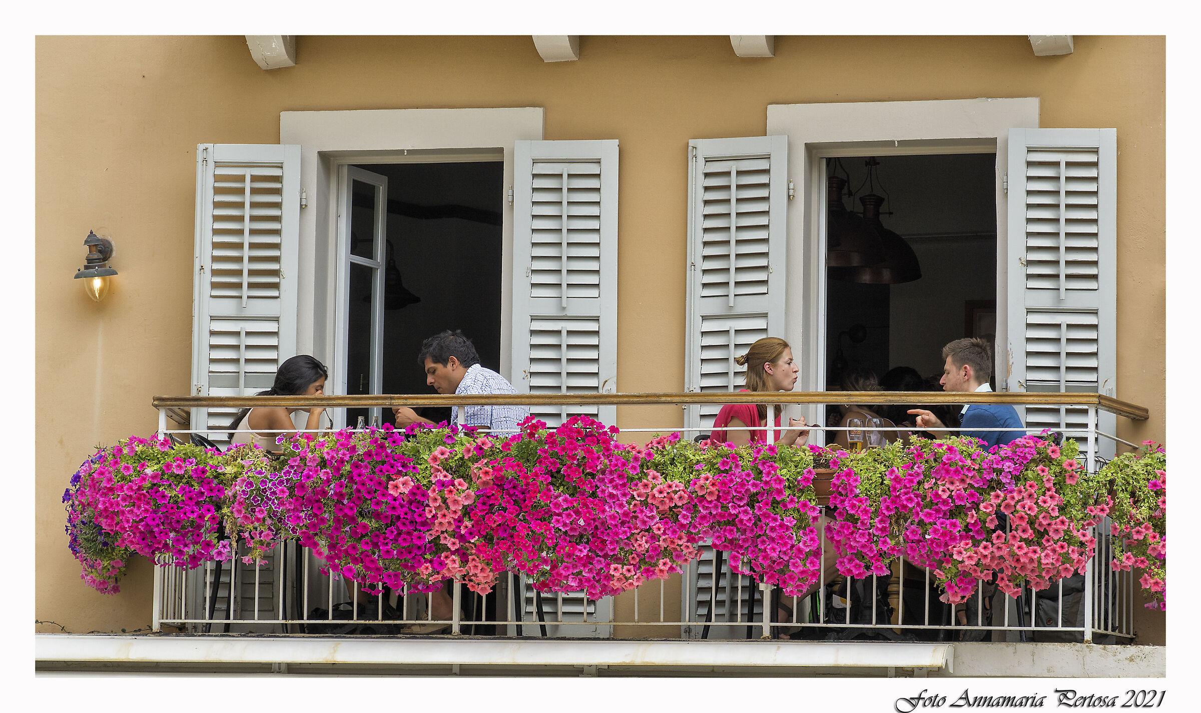 Among the flowers of Corfu...
