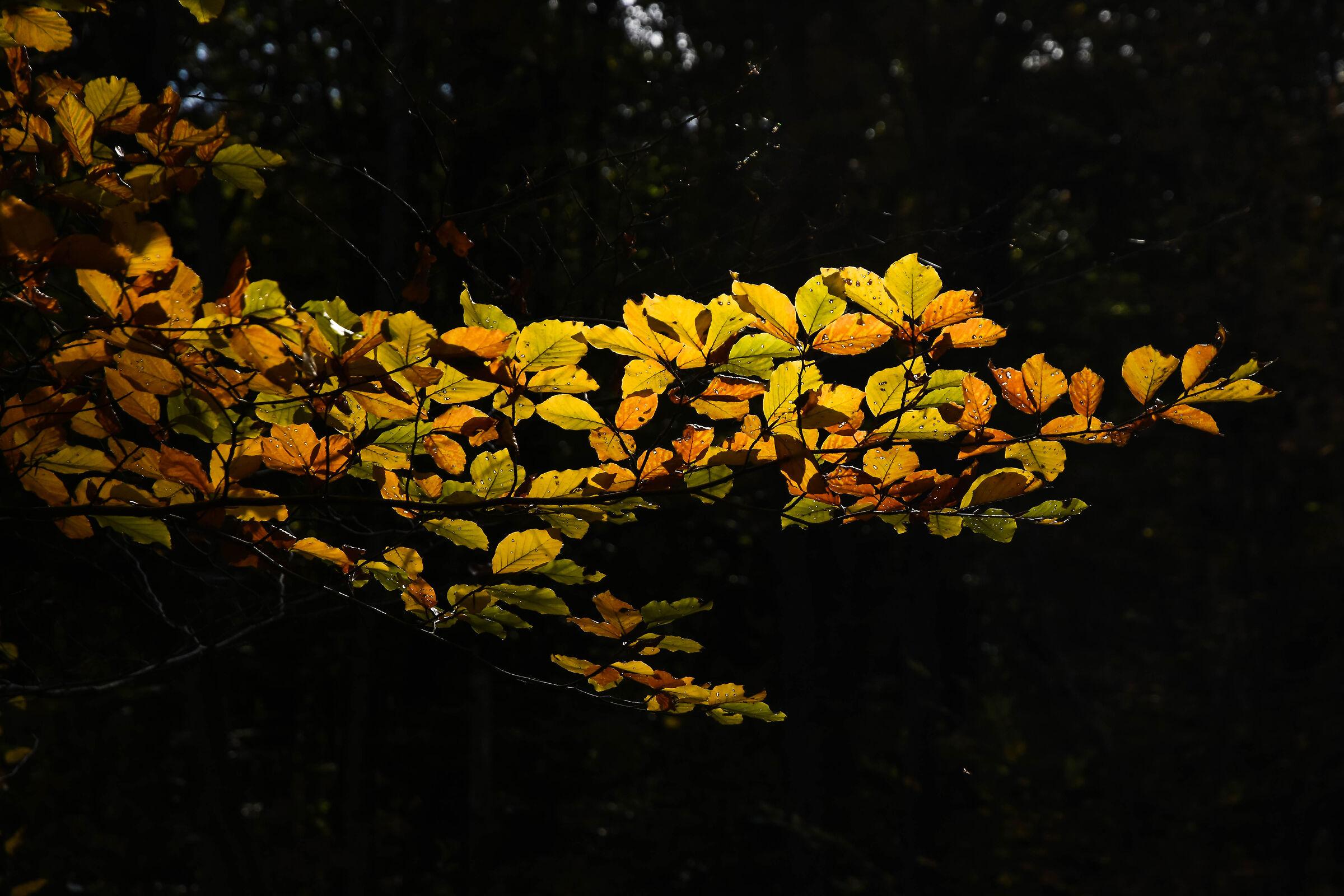 Autumn 2021...