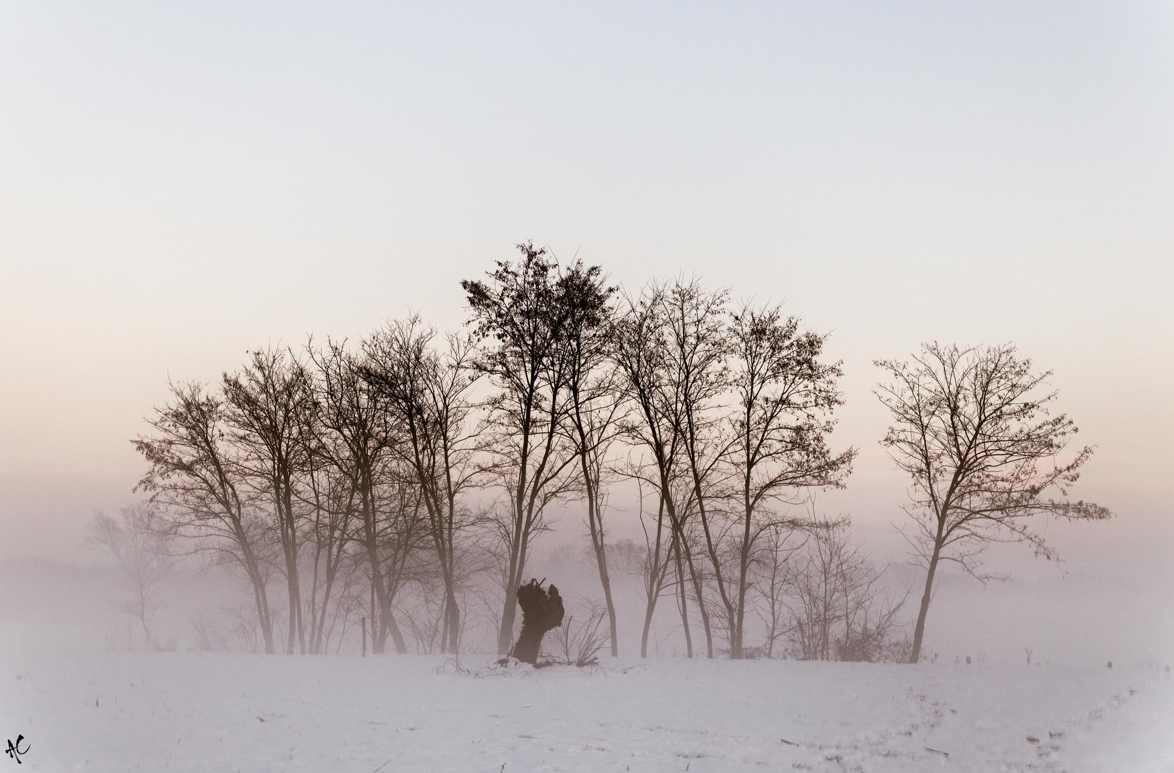 d'inverno...