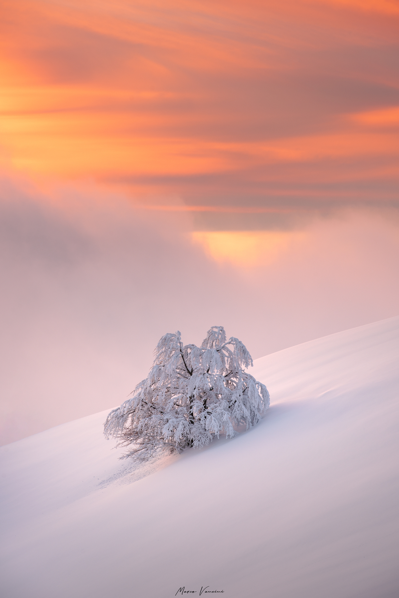 the colors of winter...