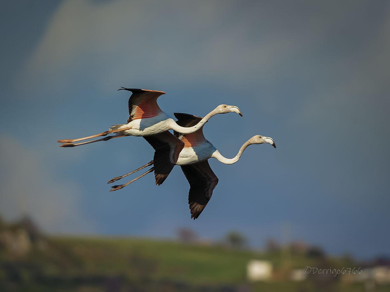 I dos Flamingos......