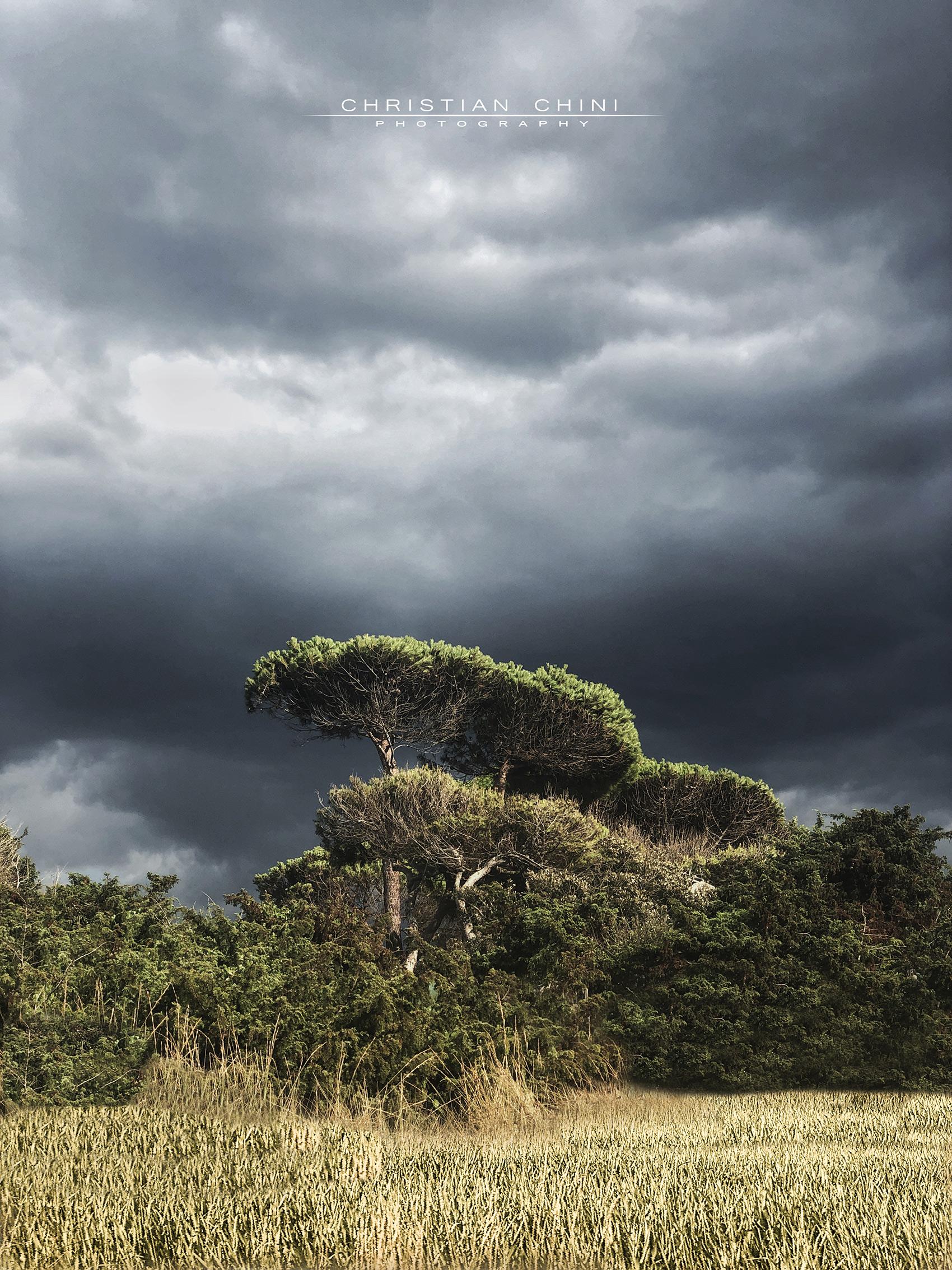 Italian savanna...