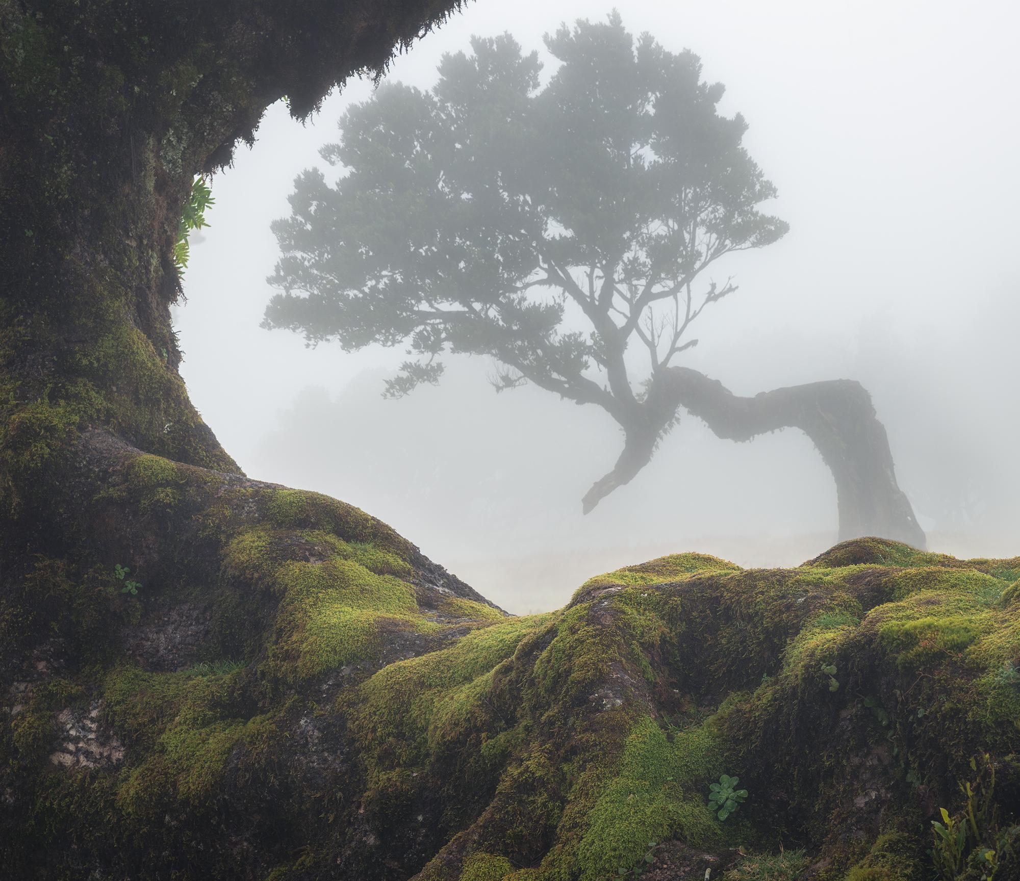 Jurassic tree...